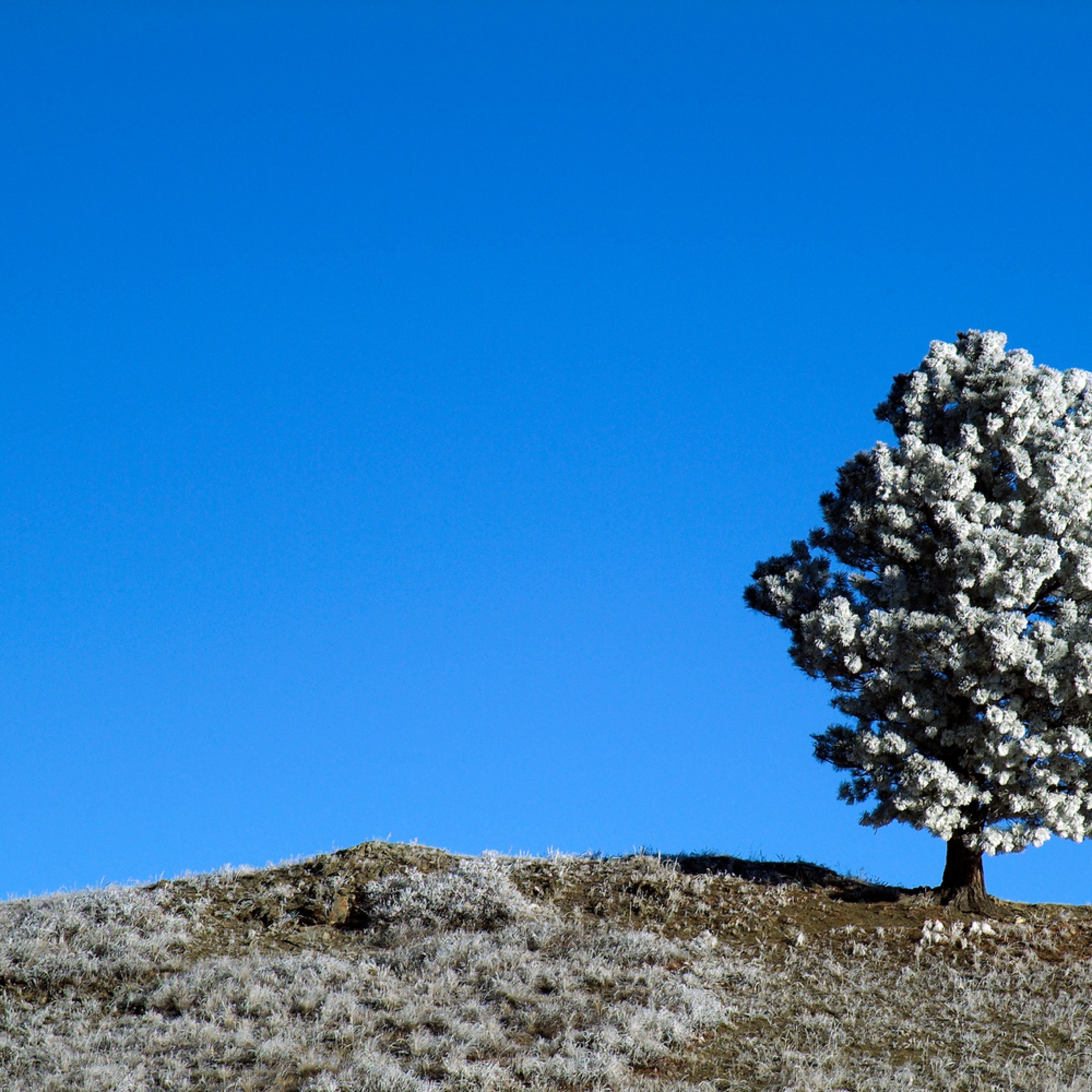 Lone tree cjuib2
