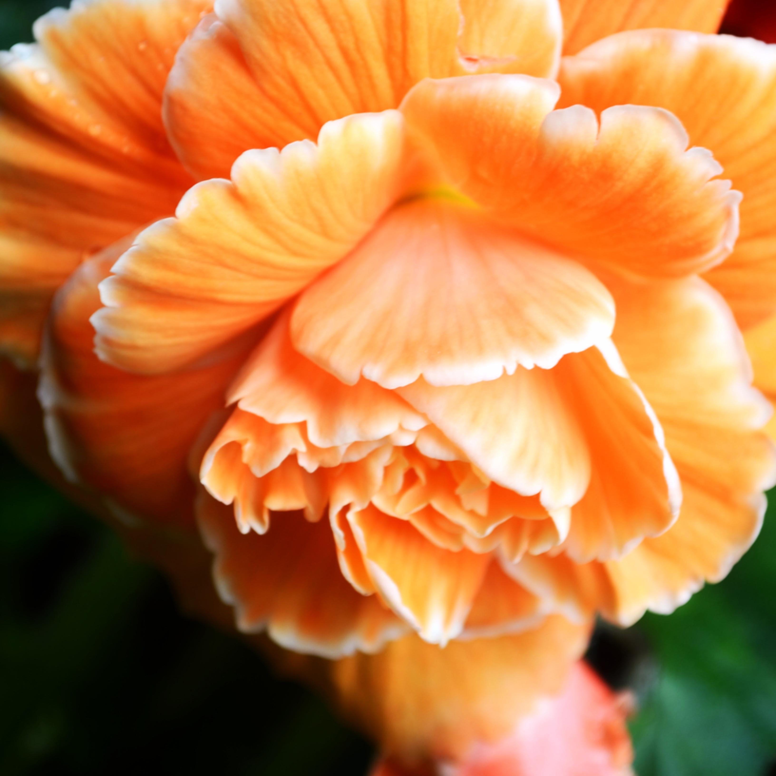 Orange is todays color w76wtz
