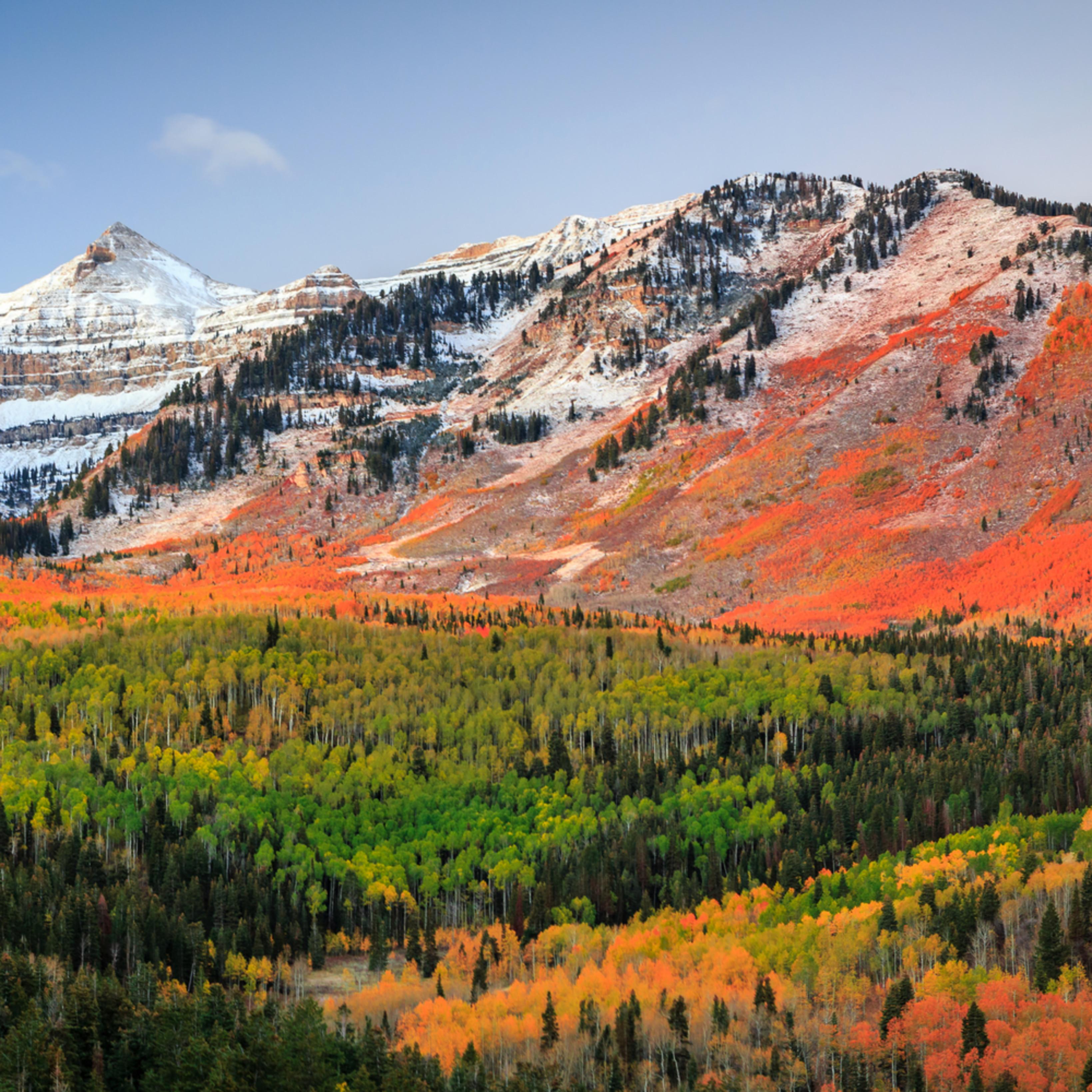 Autumn splendor in the ufo bowls r2ppyg