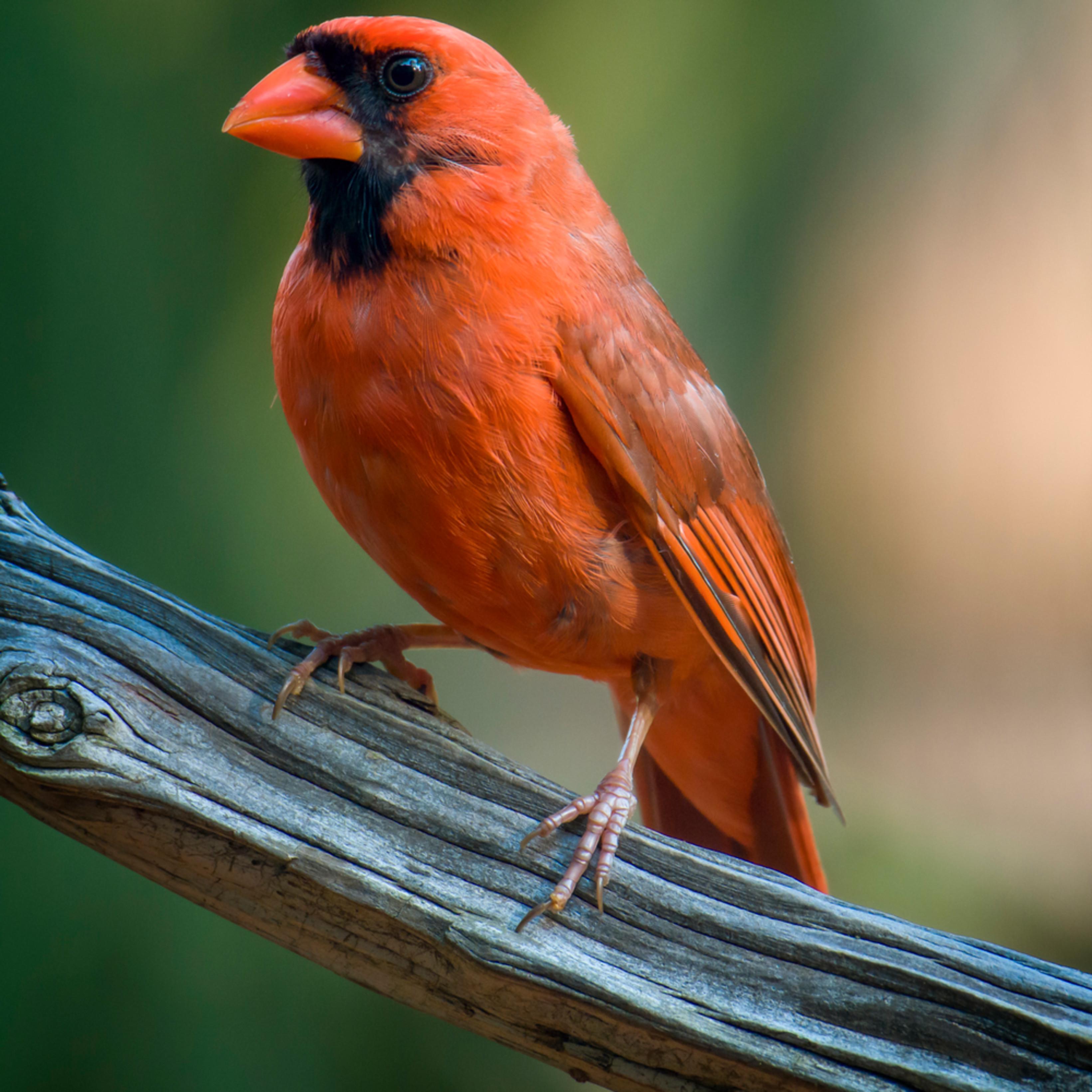 Backyard birds   june 2020 x 20200622 1167 zh4rl9