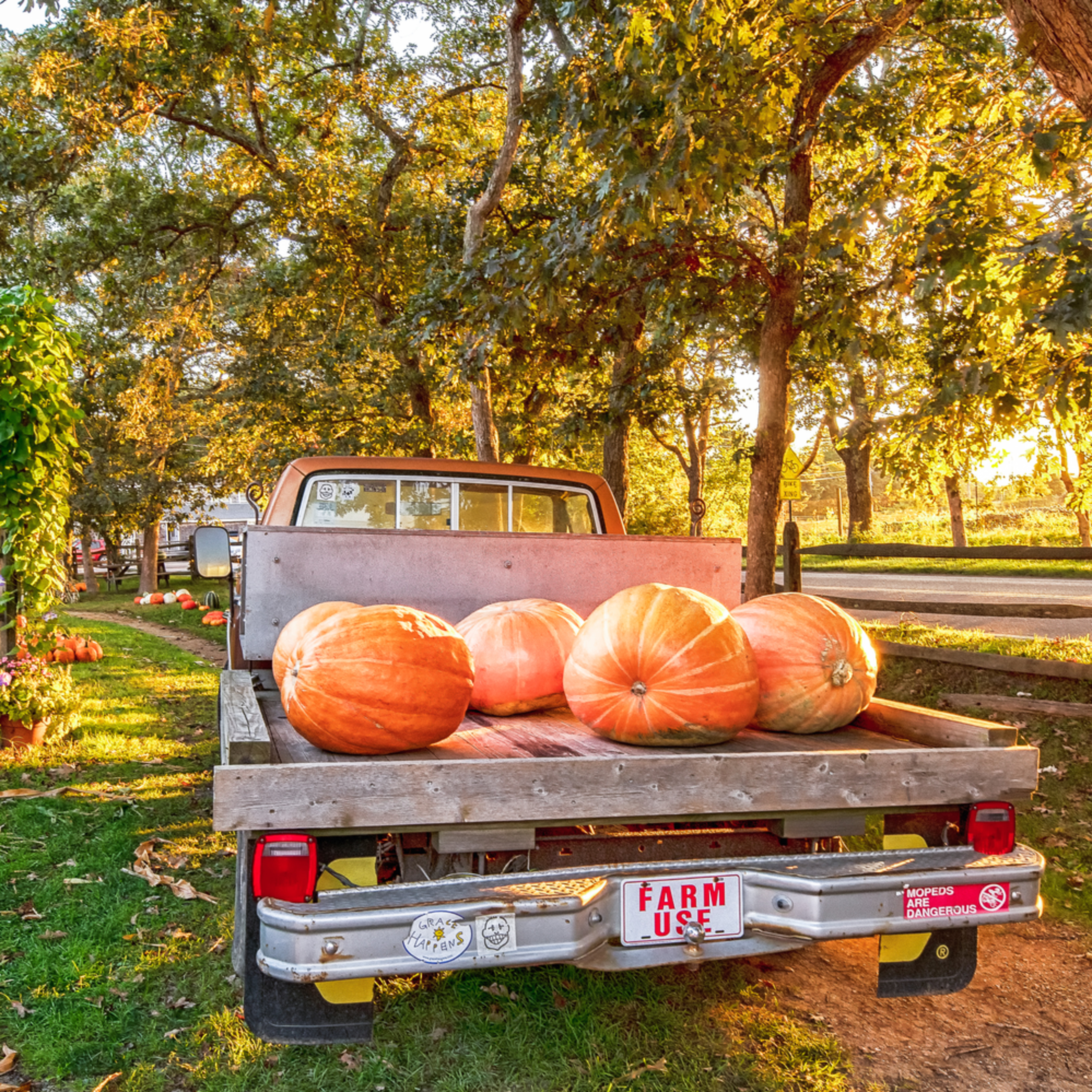 Morning glory fall farm l78unk