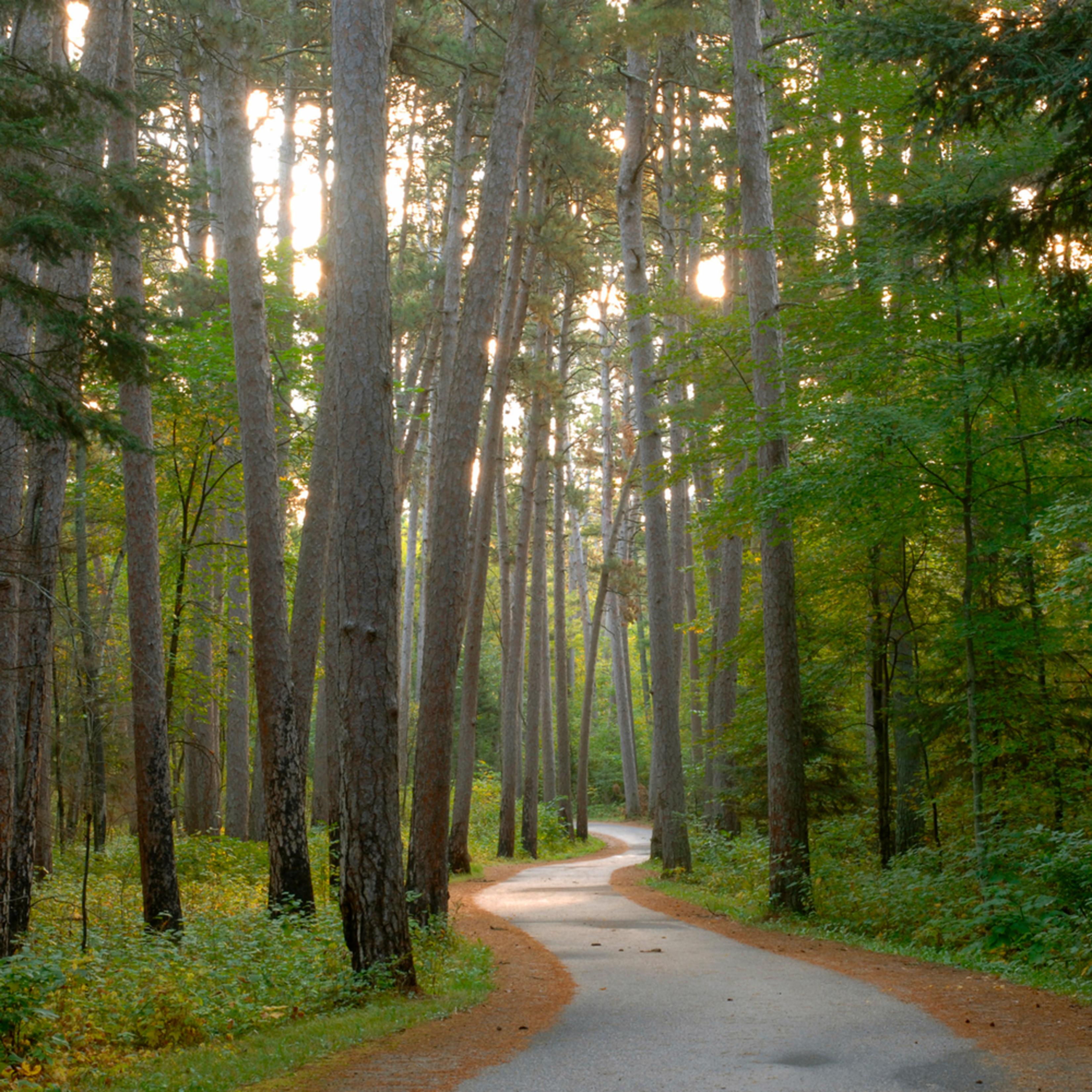 Dp313 wilderness drive mnerfy