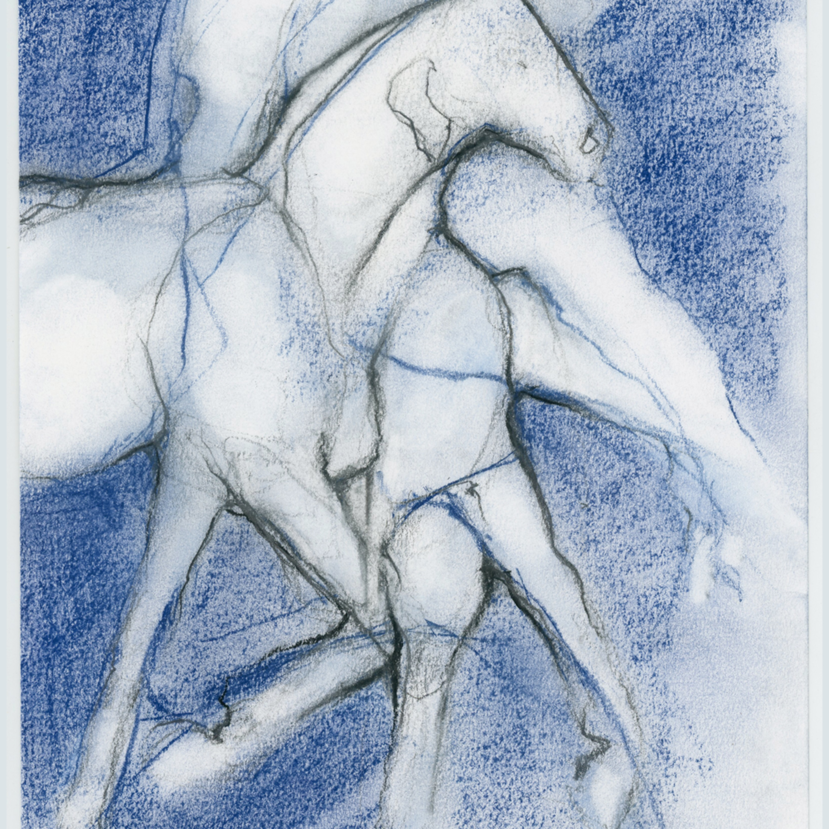 Horses in blue pypwo0