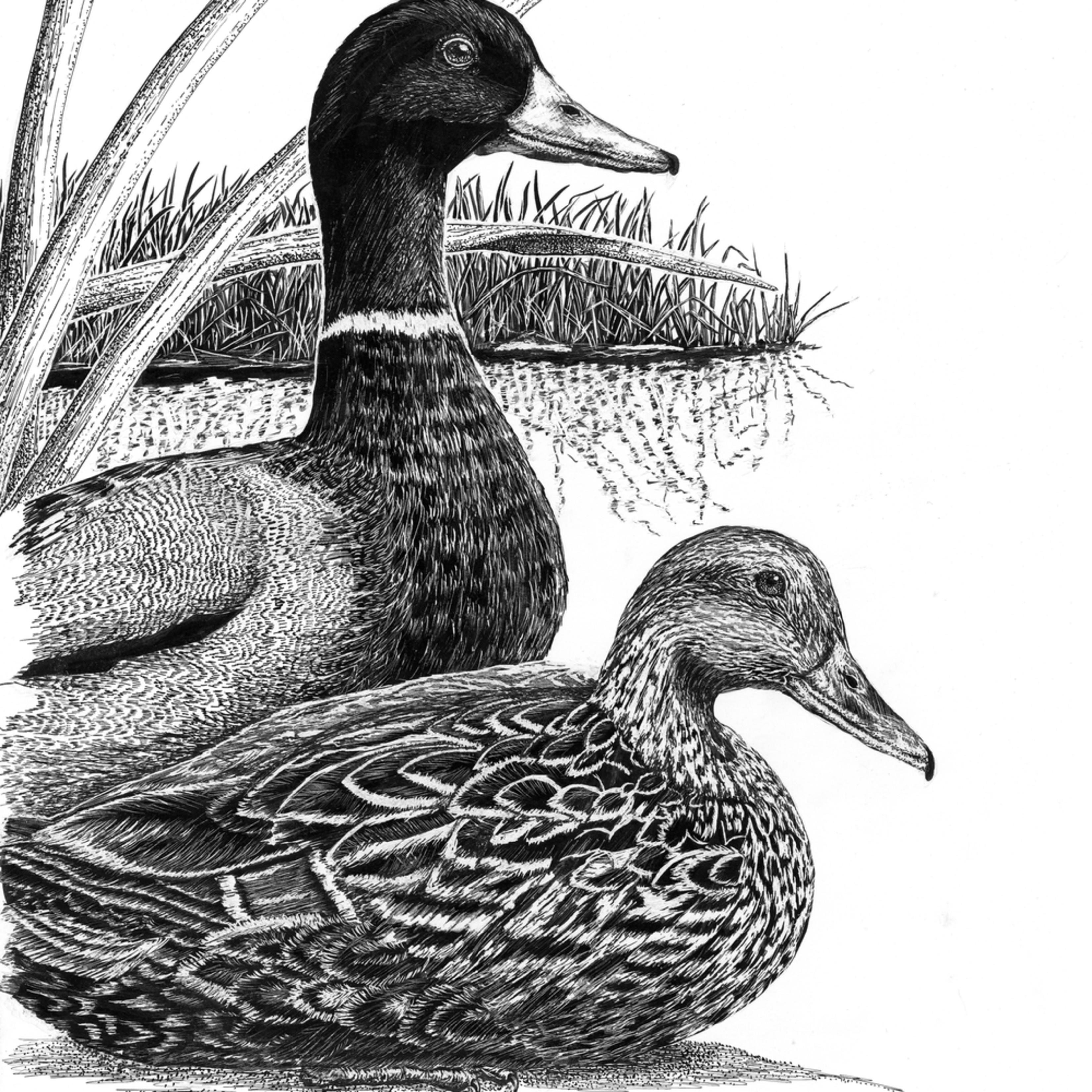 Ducks new qssqpp
