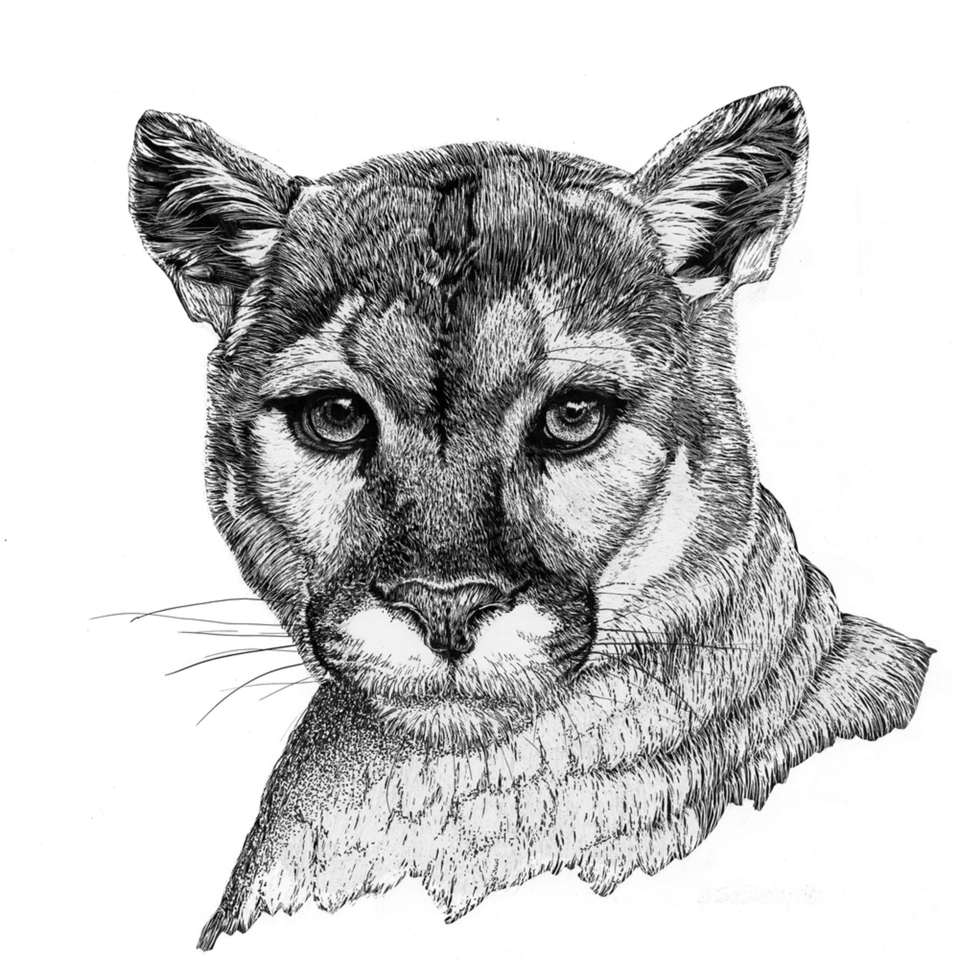 Mt lion new ws0t2f