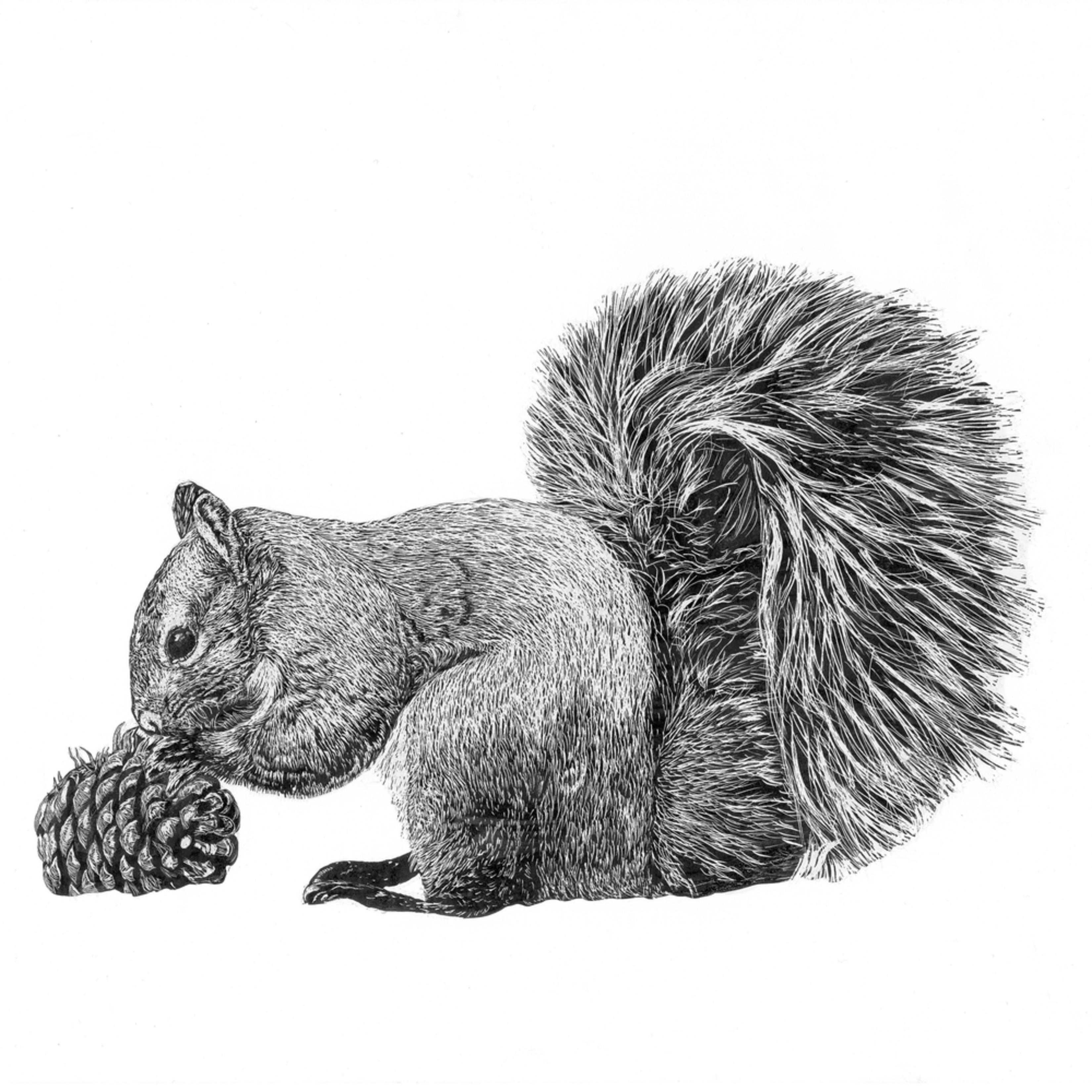 Squirrel new jkmusj