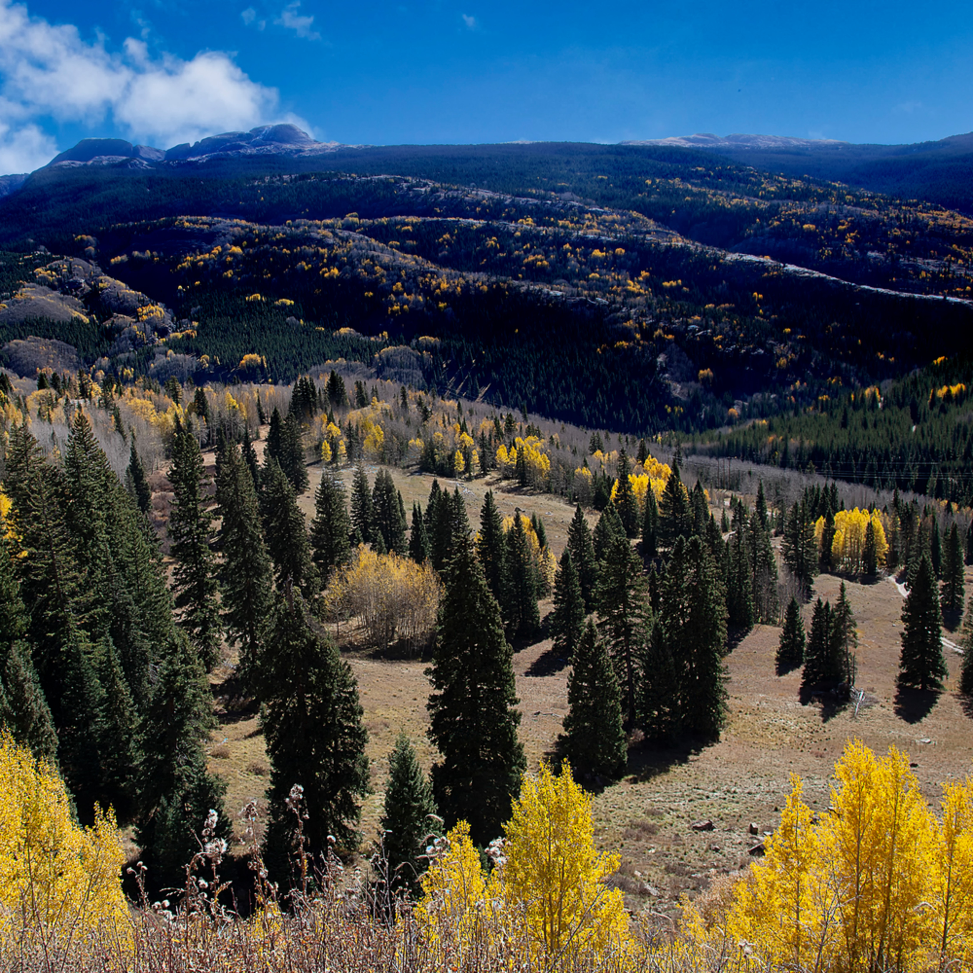 Colorado touch of gold ffpb9h