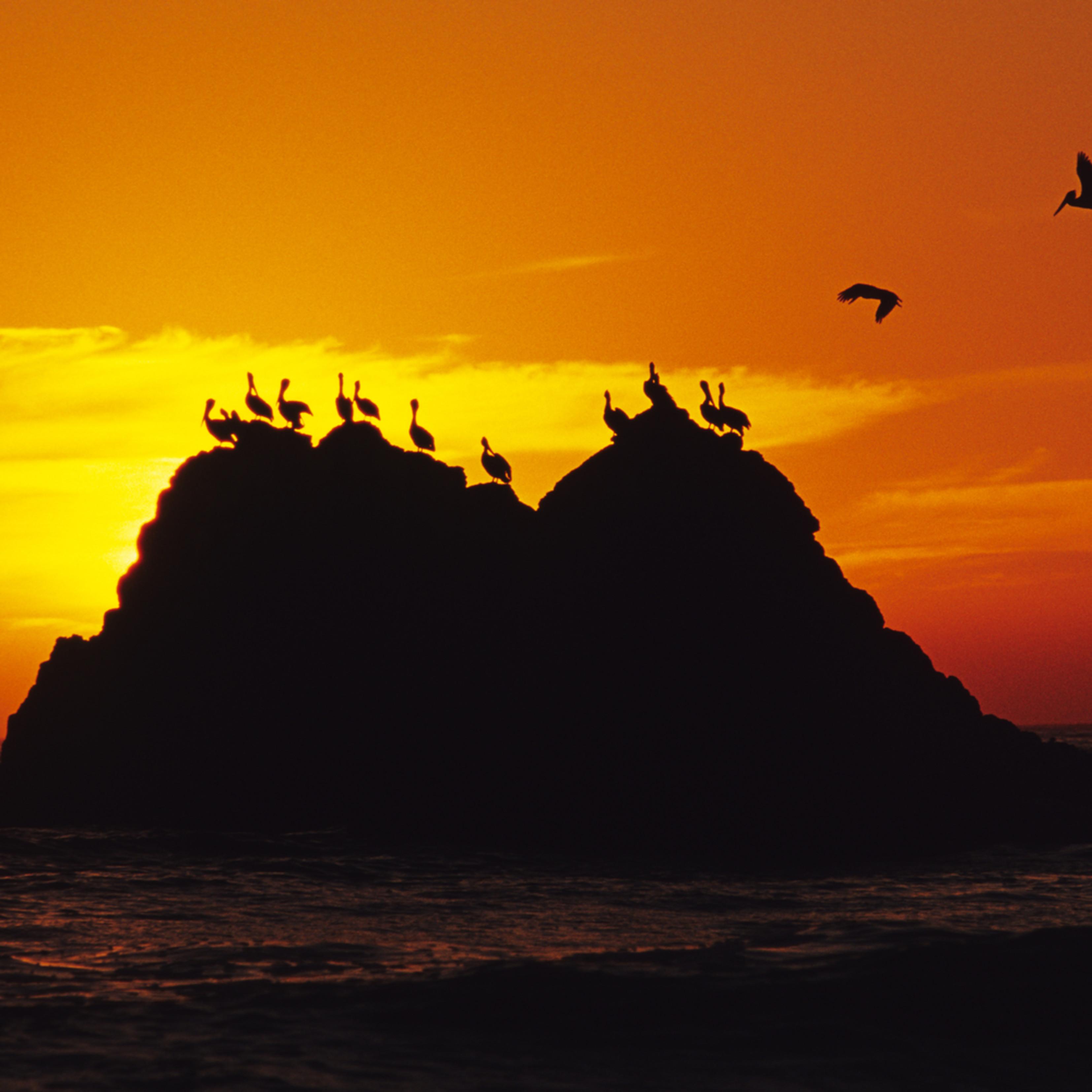 Pelican rock jbgfga