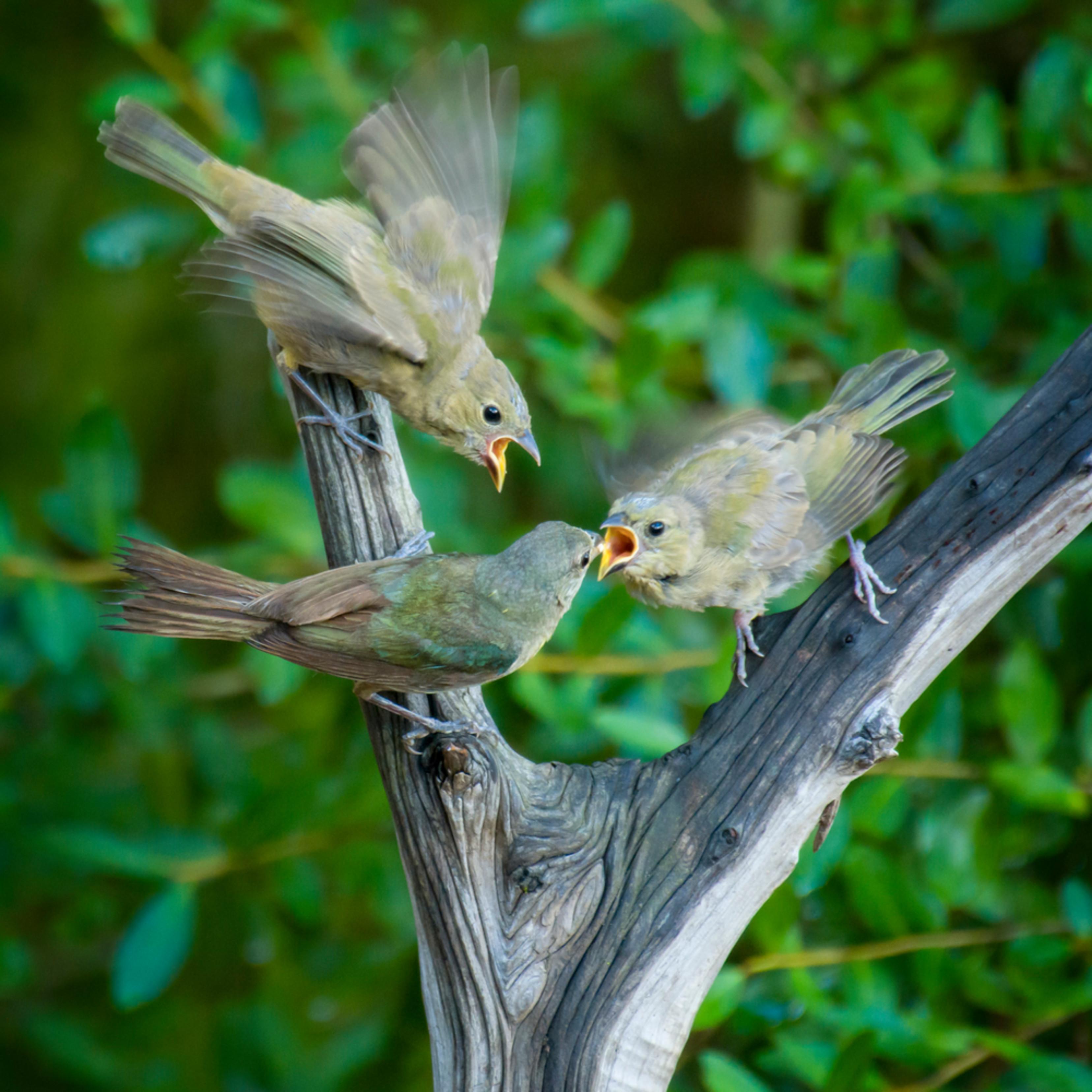 Backyard birds   aug2019  2 20190828 3233 i1yti9