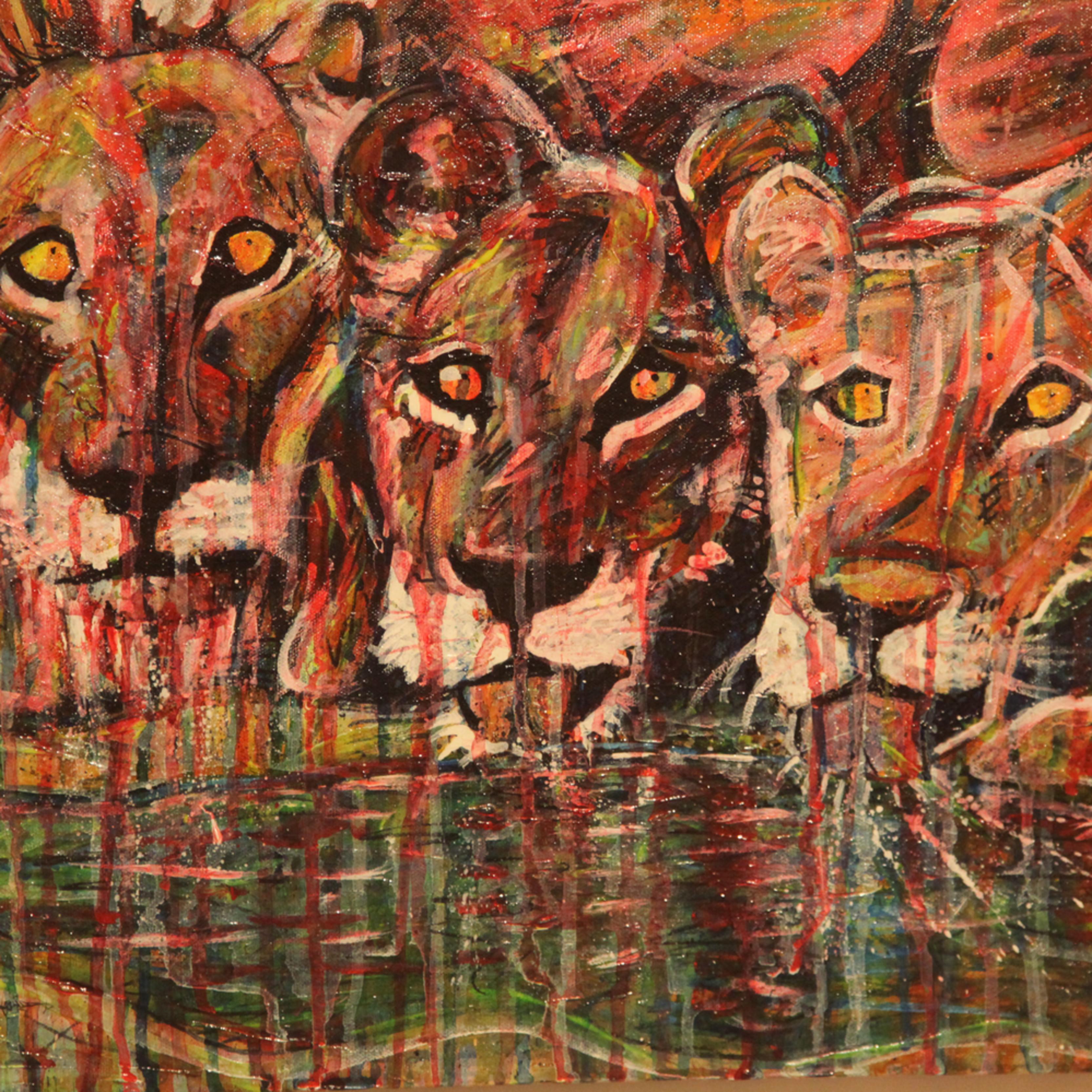 Lions trvbn5