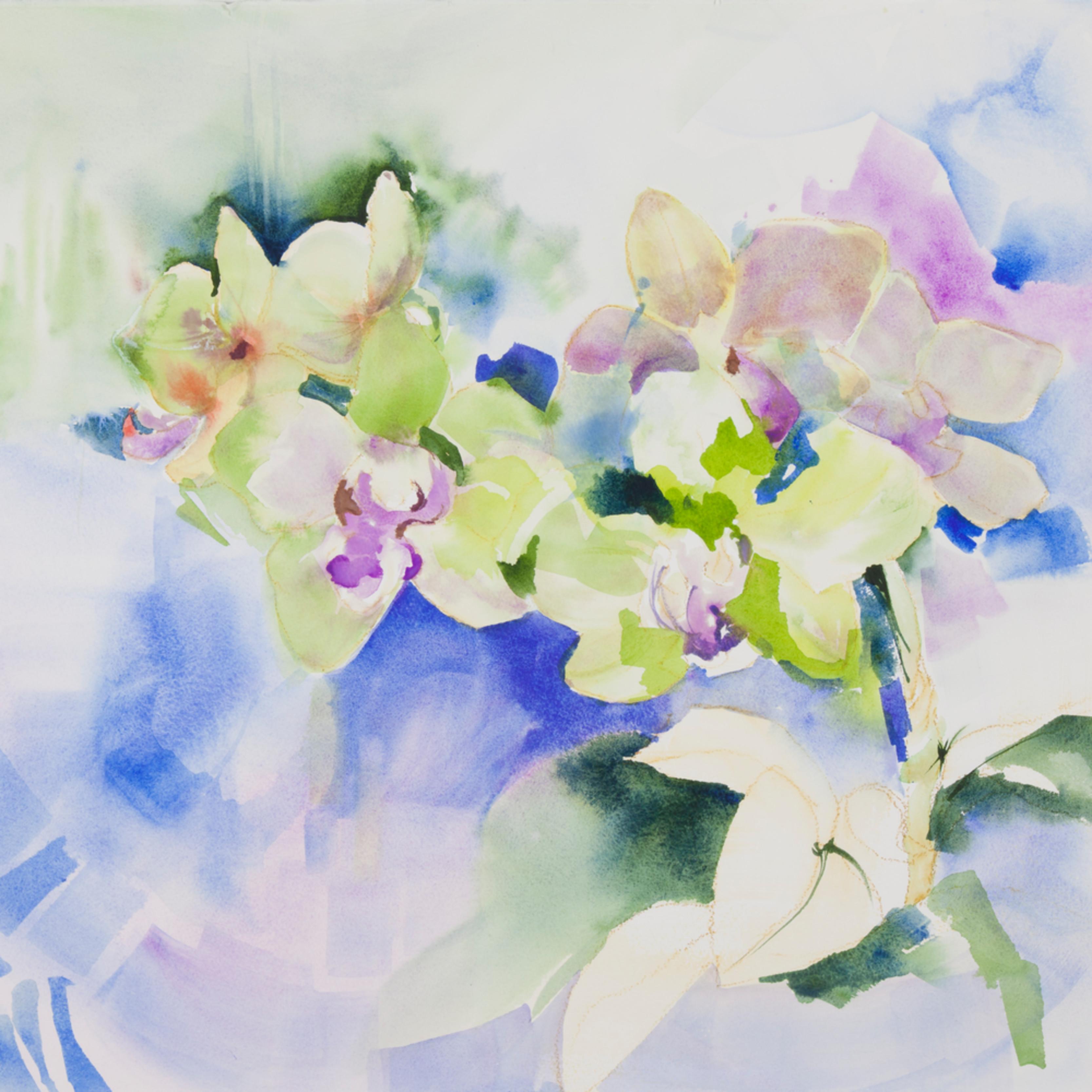 Orchid paradise bz3cwr