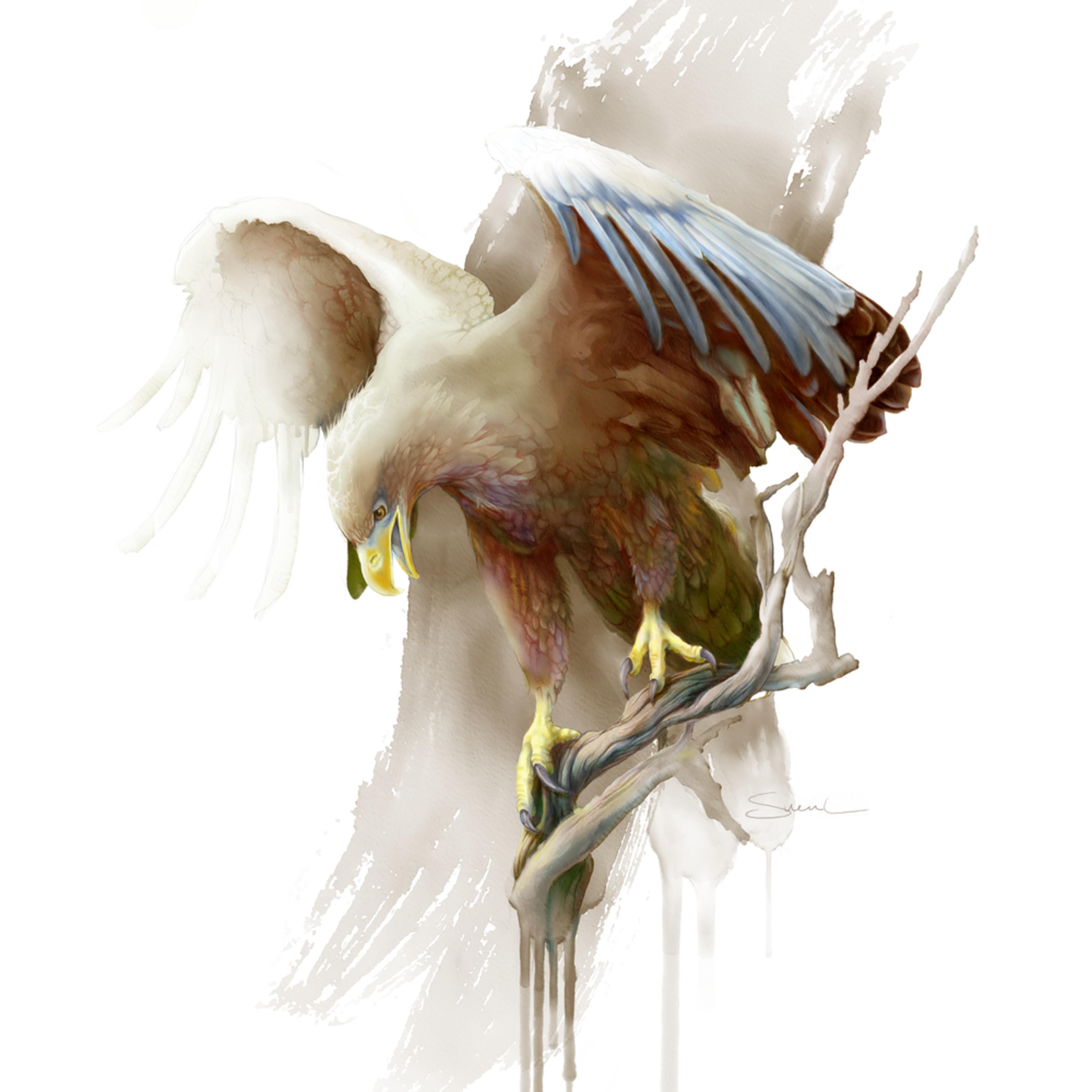 White tail eagle znbol5