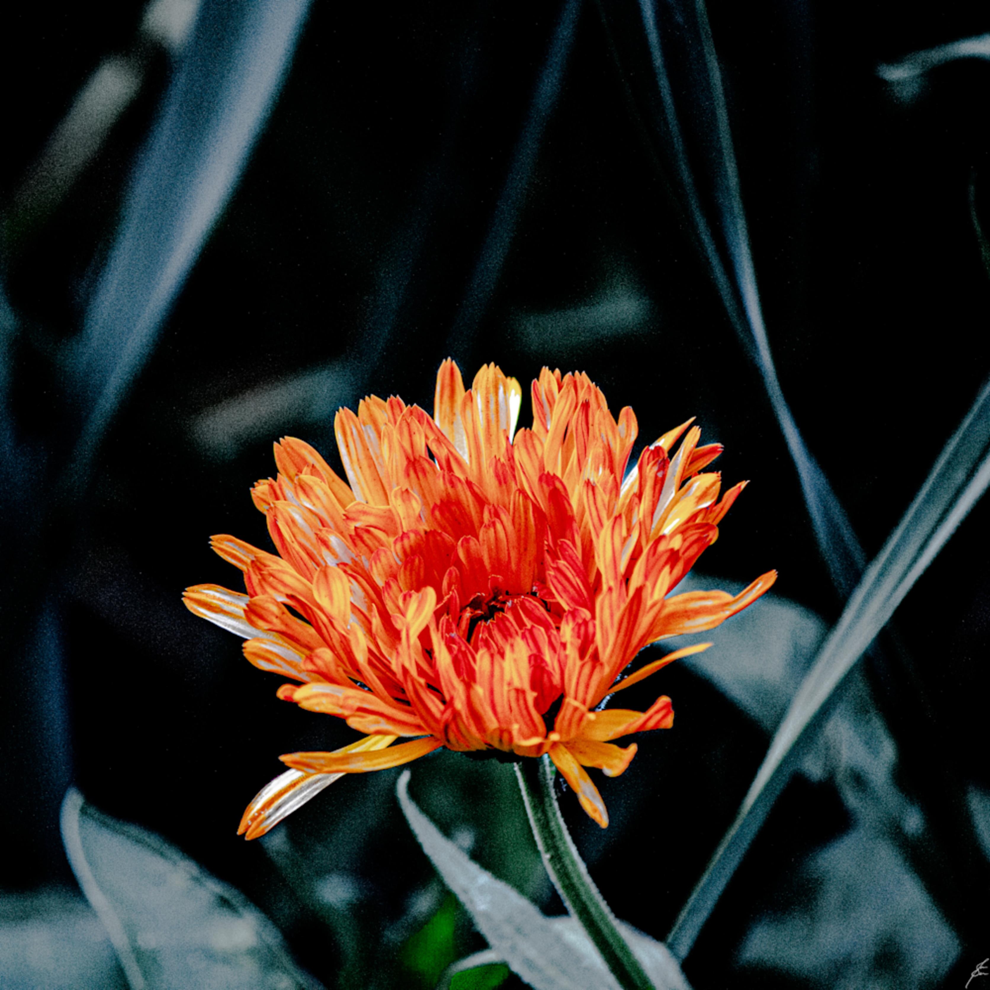 5917 flower tw2tch