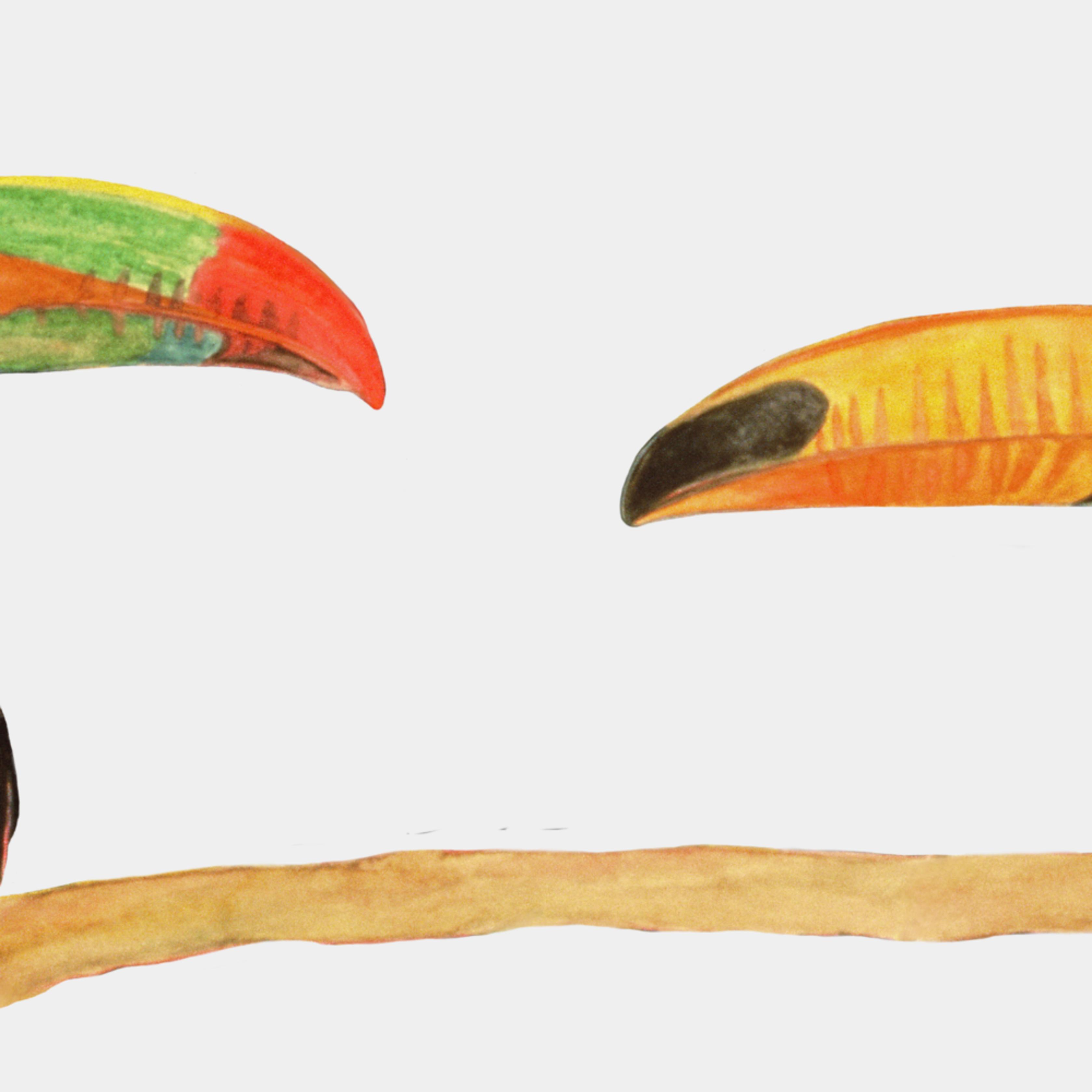Dee van houten toucan love giclee 2020 xgotu0