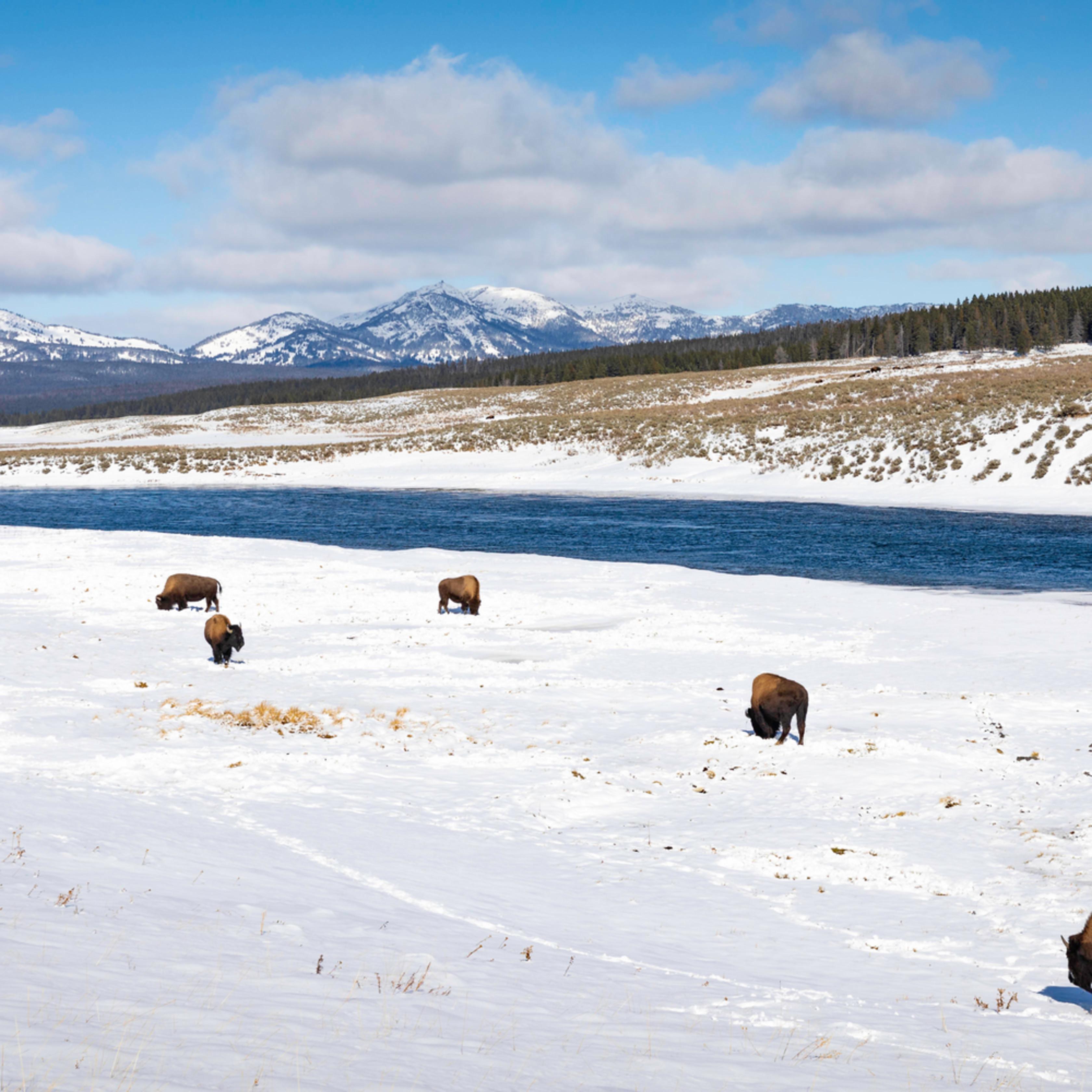 Where buffalo roam zdffy1
