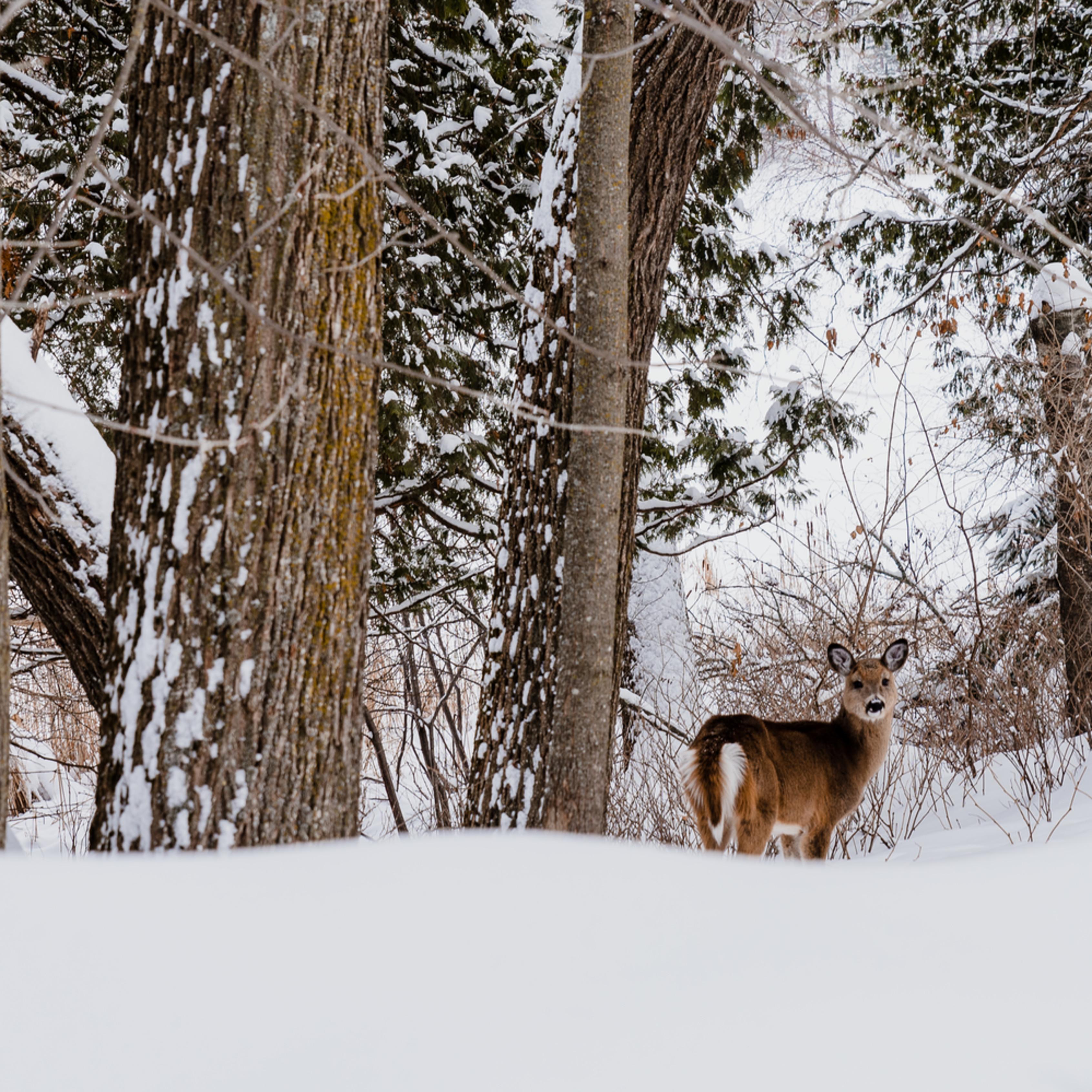 Deer   winter trhlgd