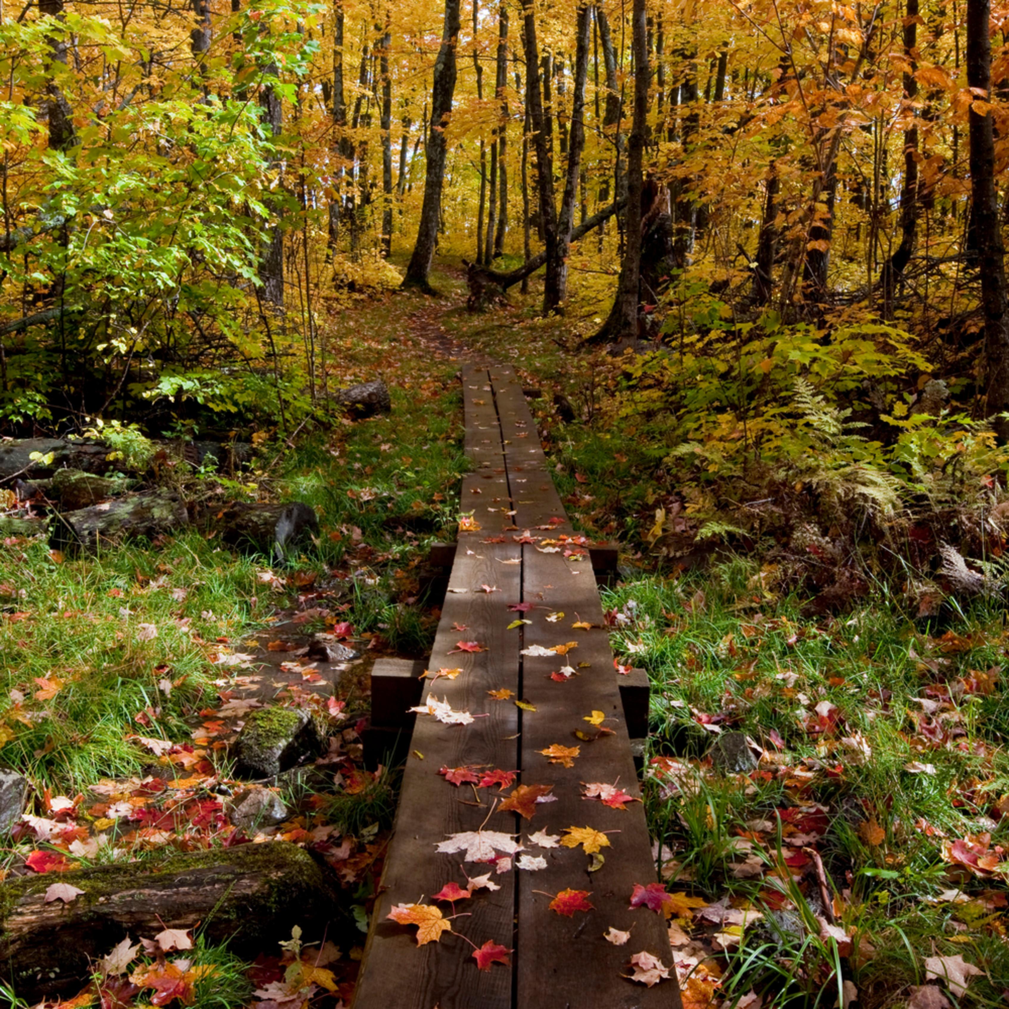 An autumns hike mjvjsb