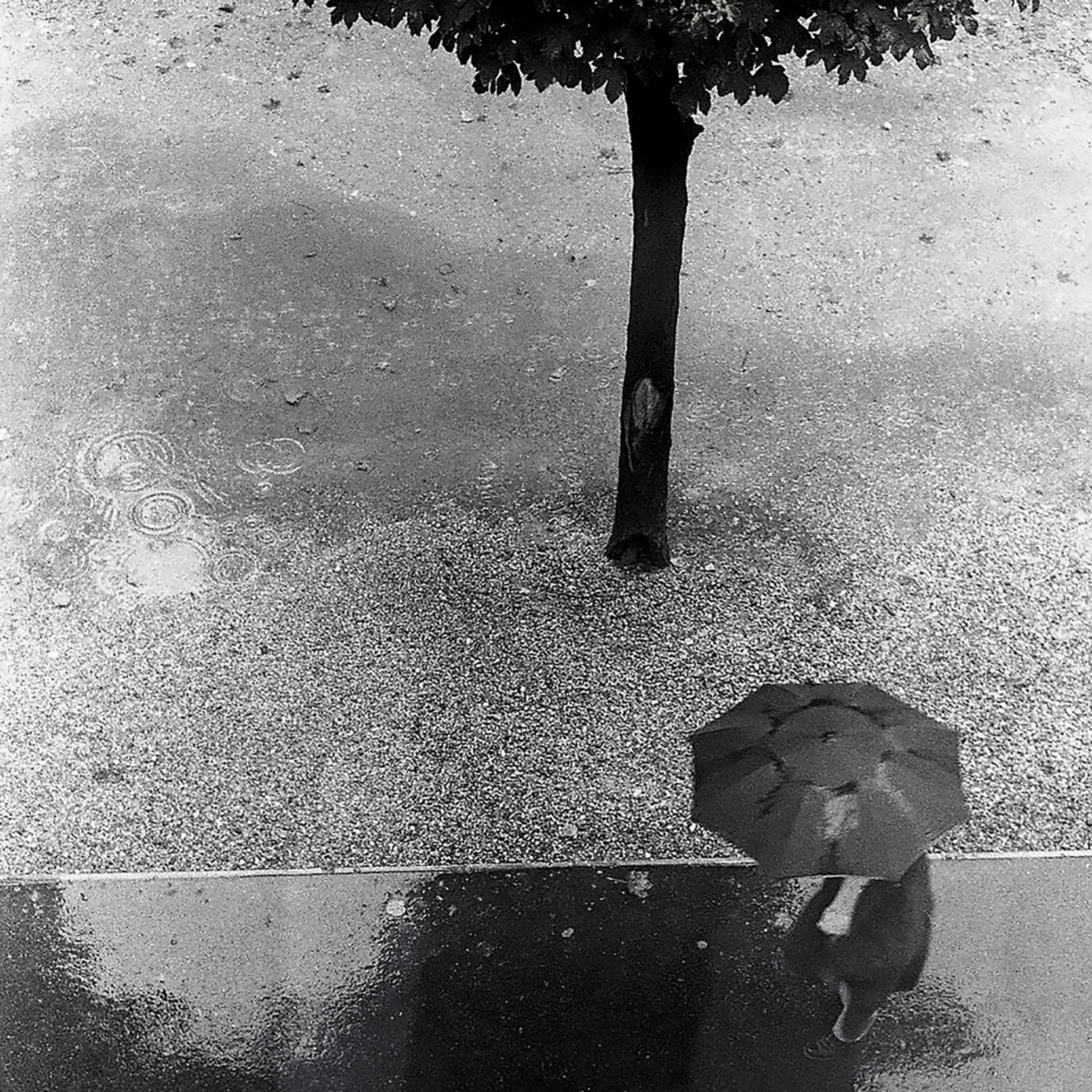 Man with umbrella paris copy 8x10 wj0bwo