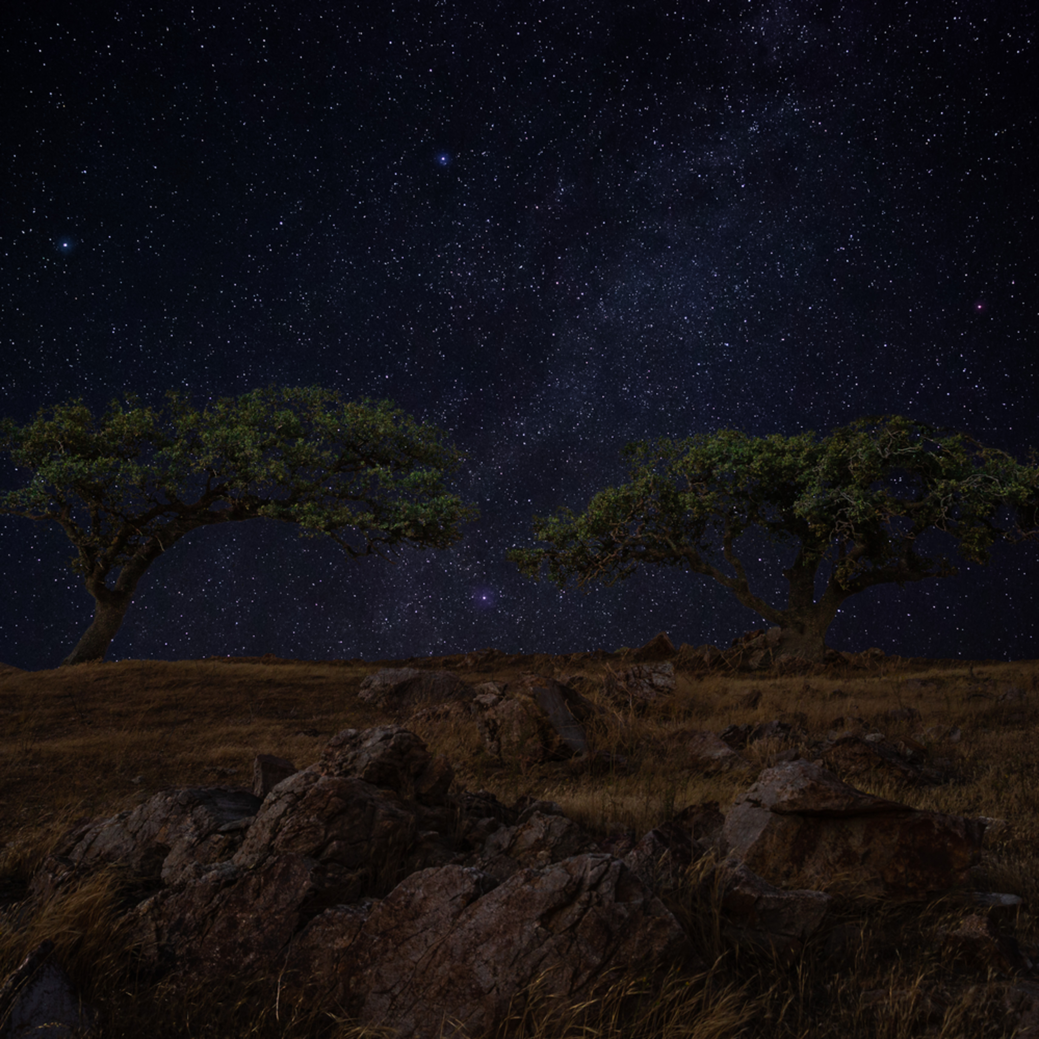 Starry oak solitude khfiw0