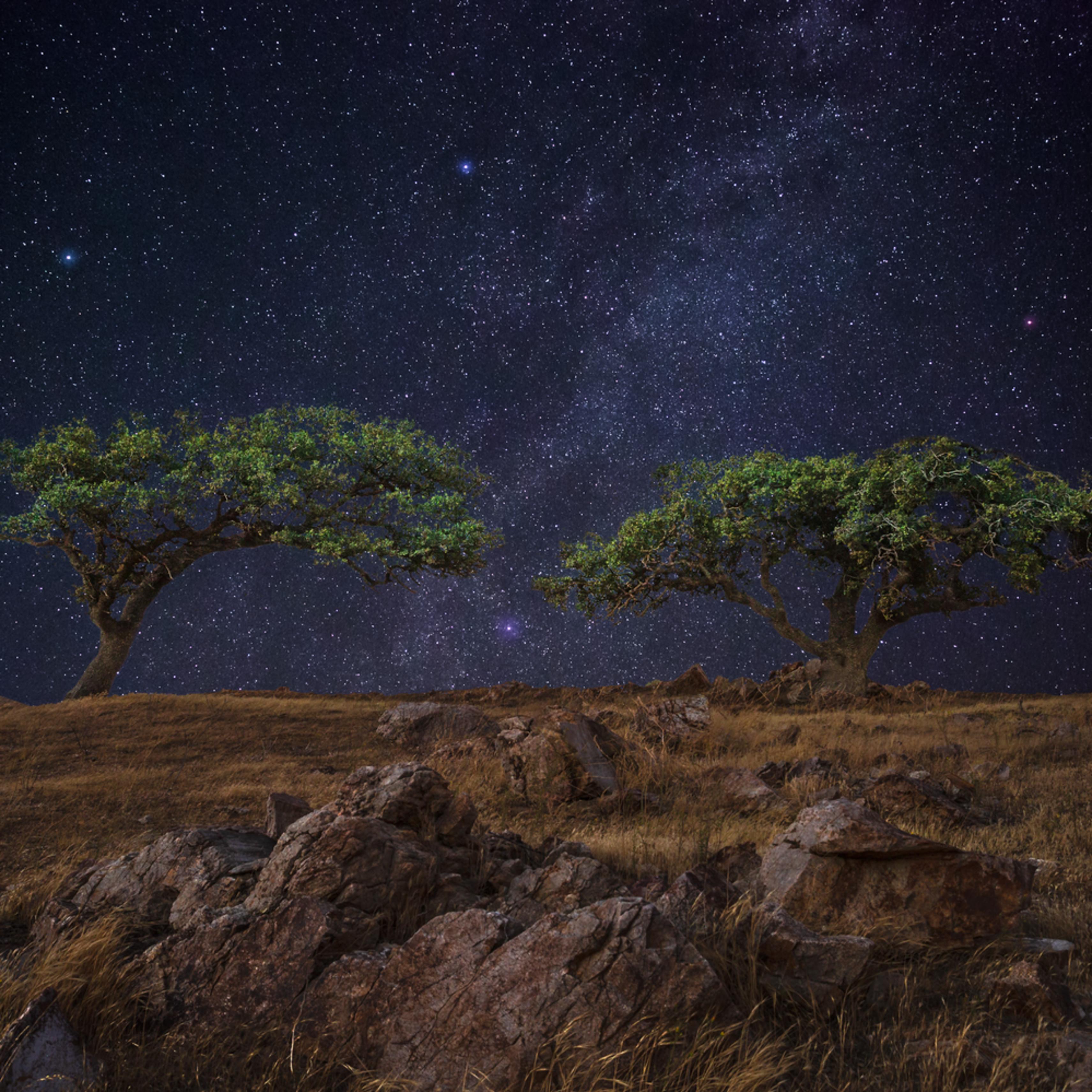 Twin starry oaks ivxfxz
