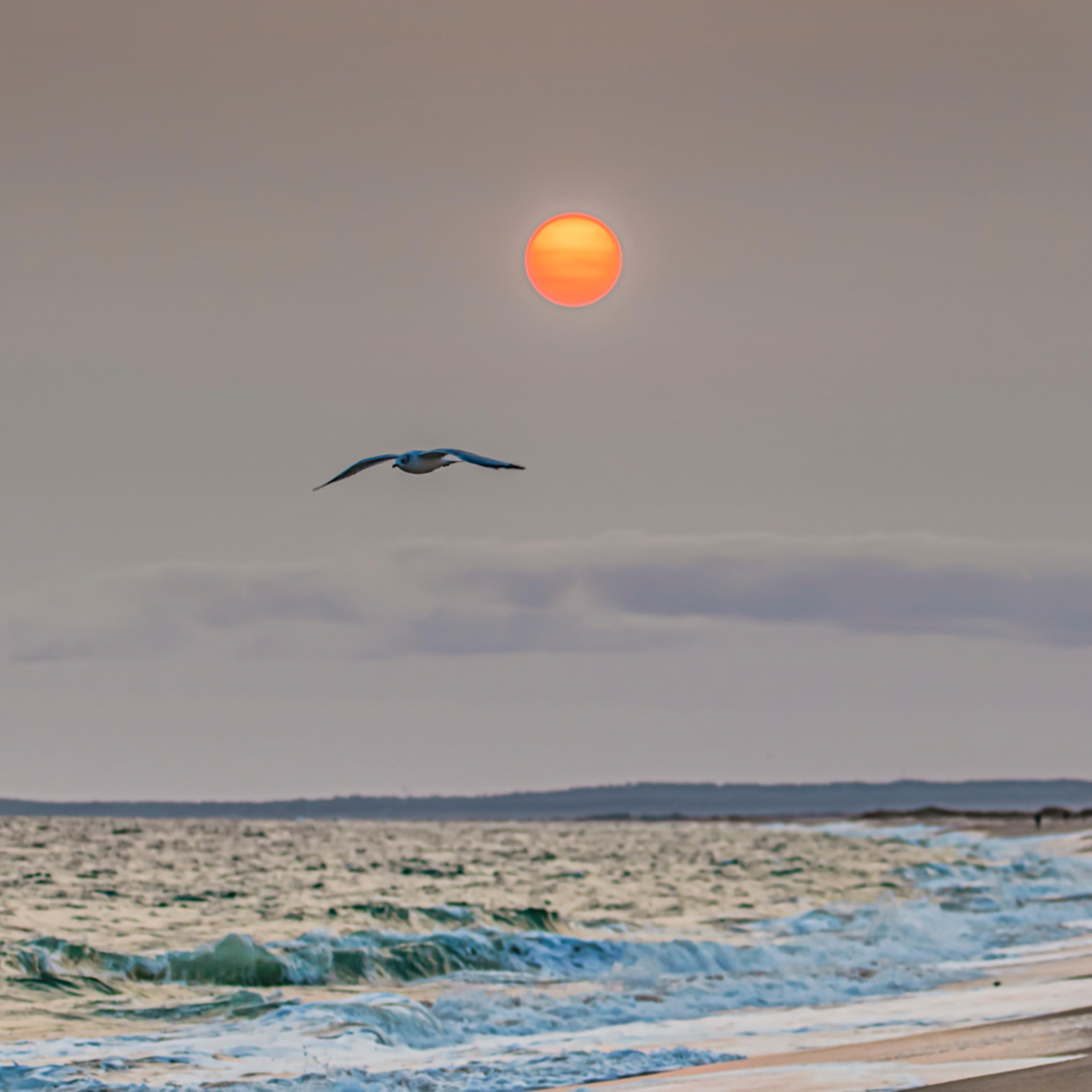 South beach smoke gull stdam0