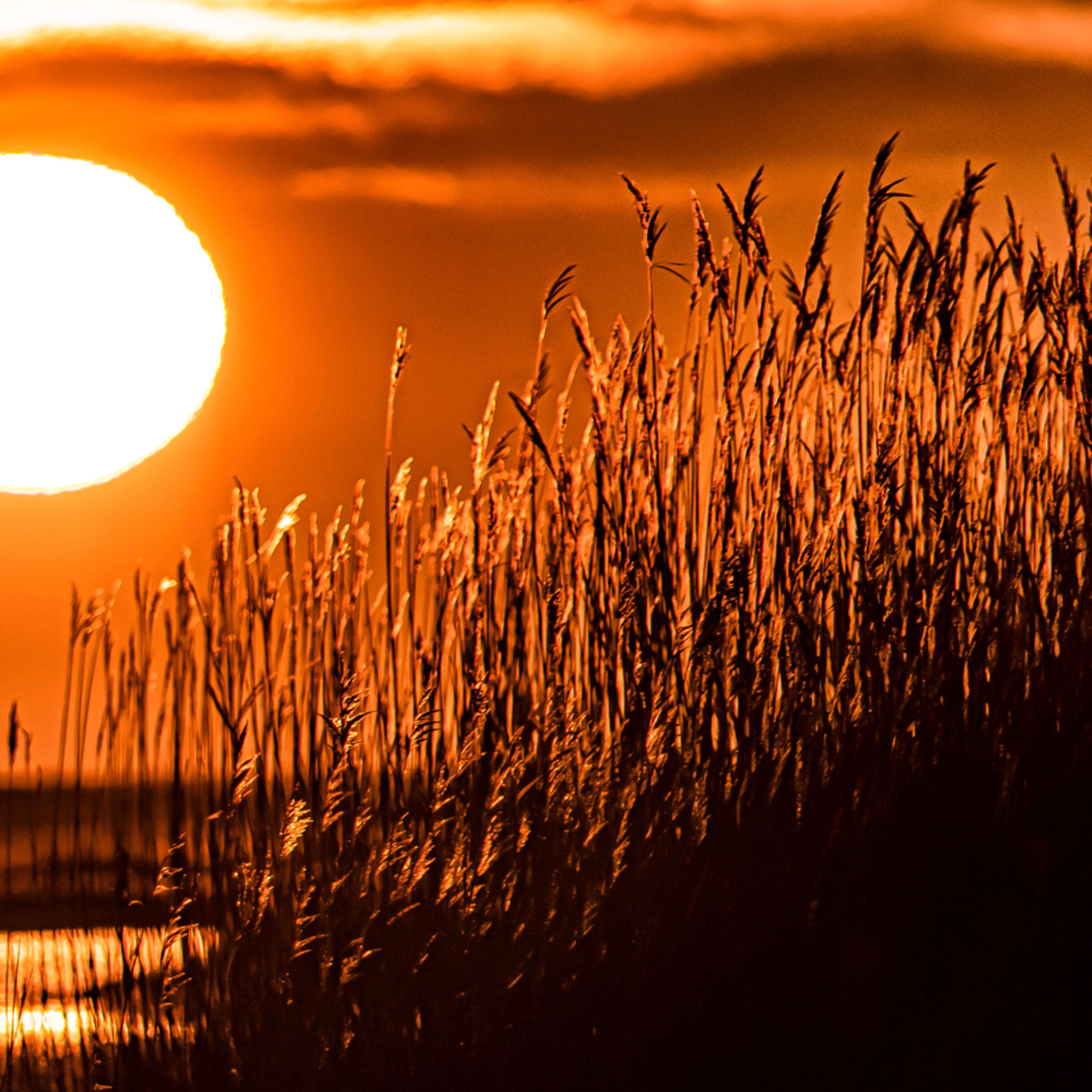 Qunasoo winter reeds sunrise mwyvzk