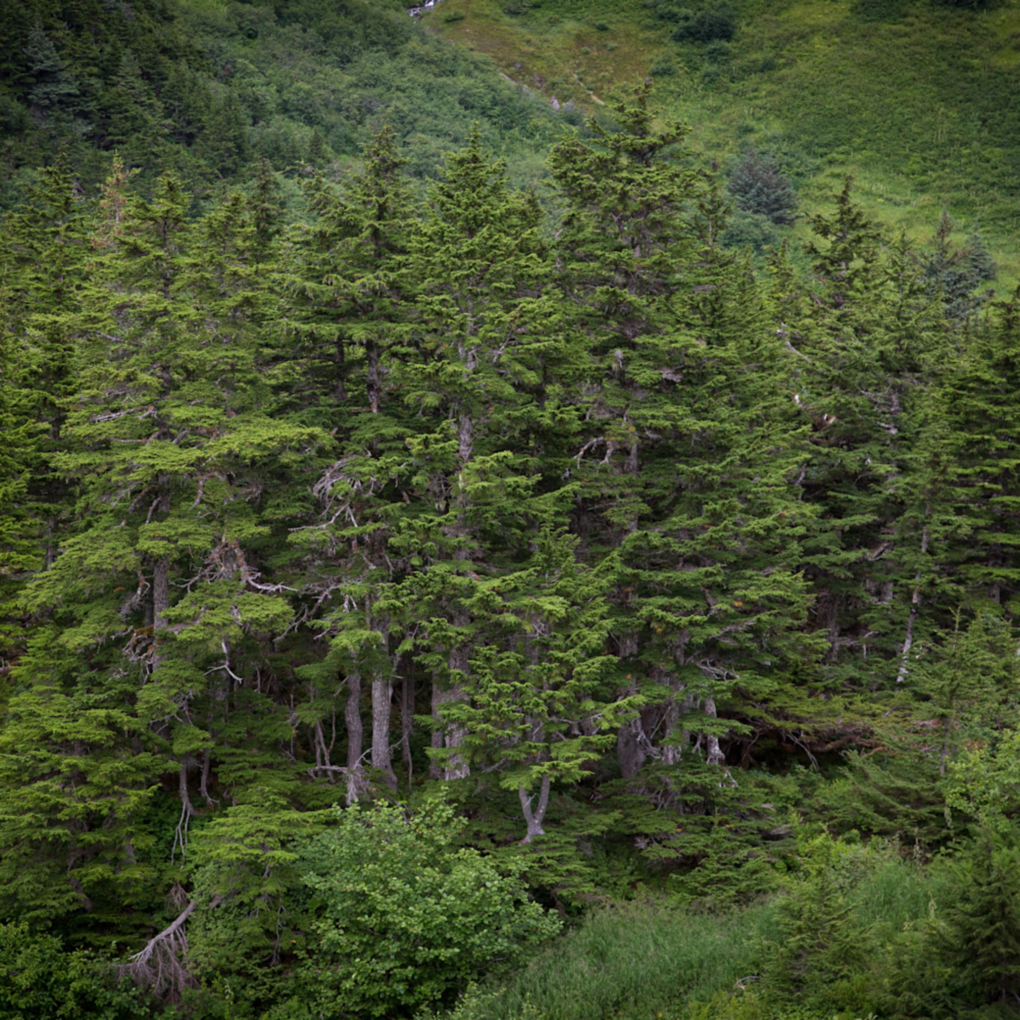 Fairytale forest evexsd