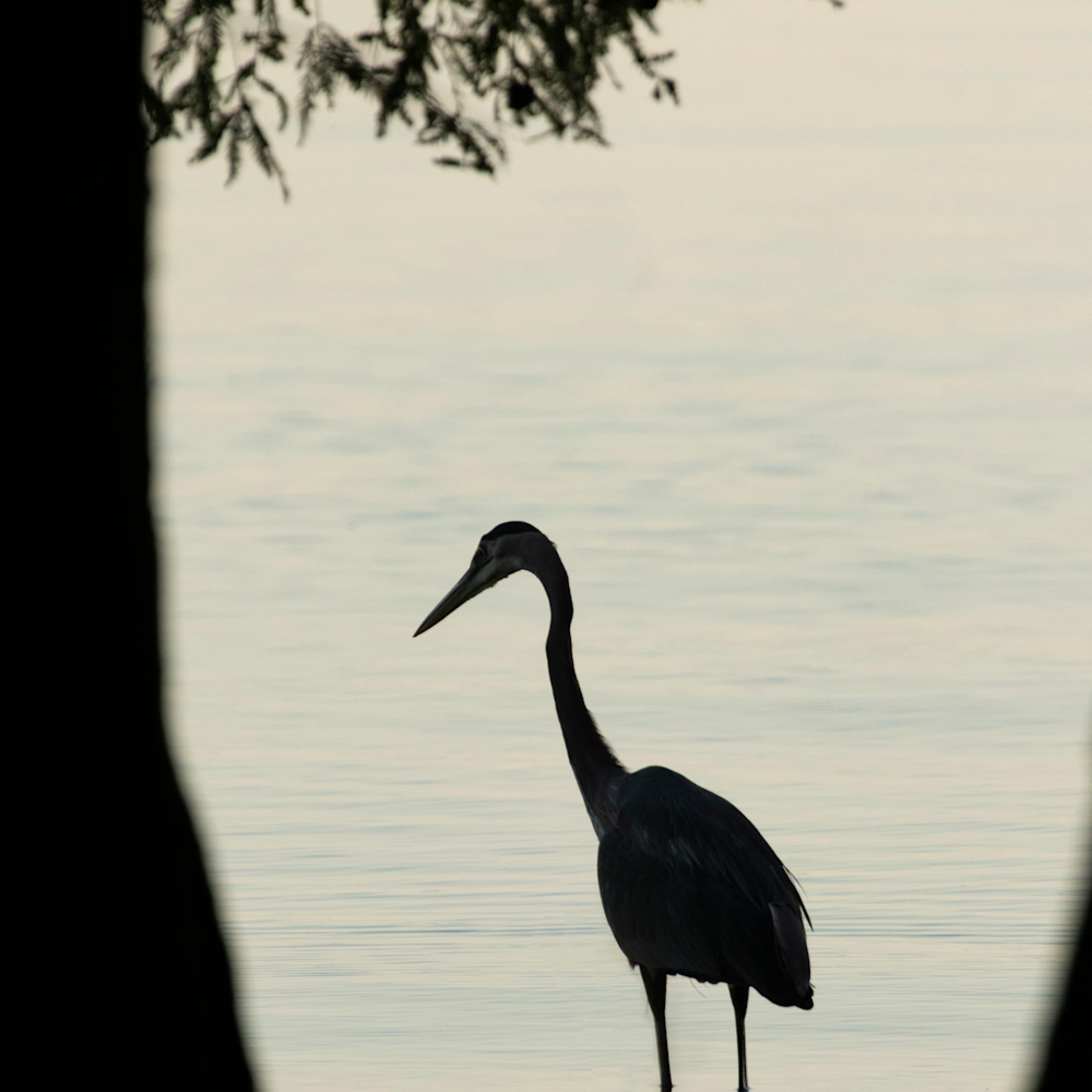 Heron silhouettes mg 7532 srm20 gfryde