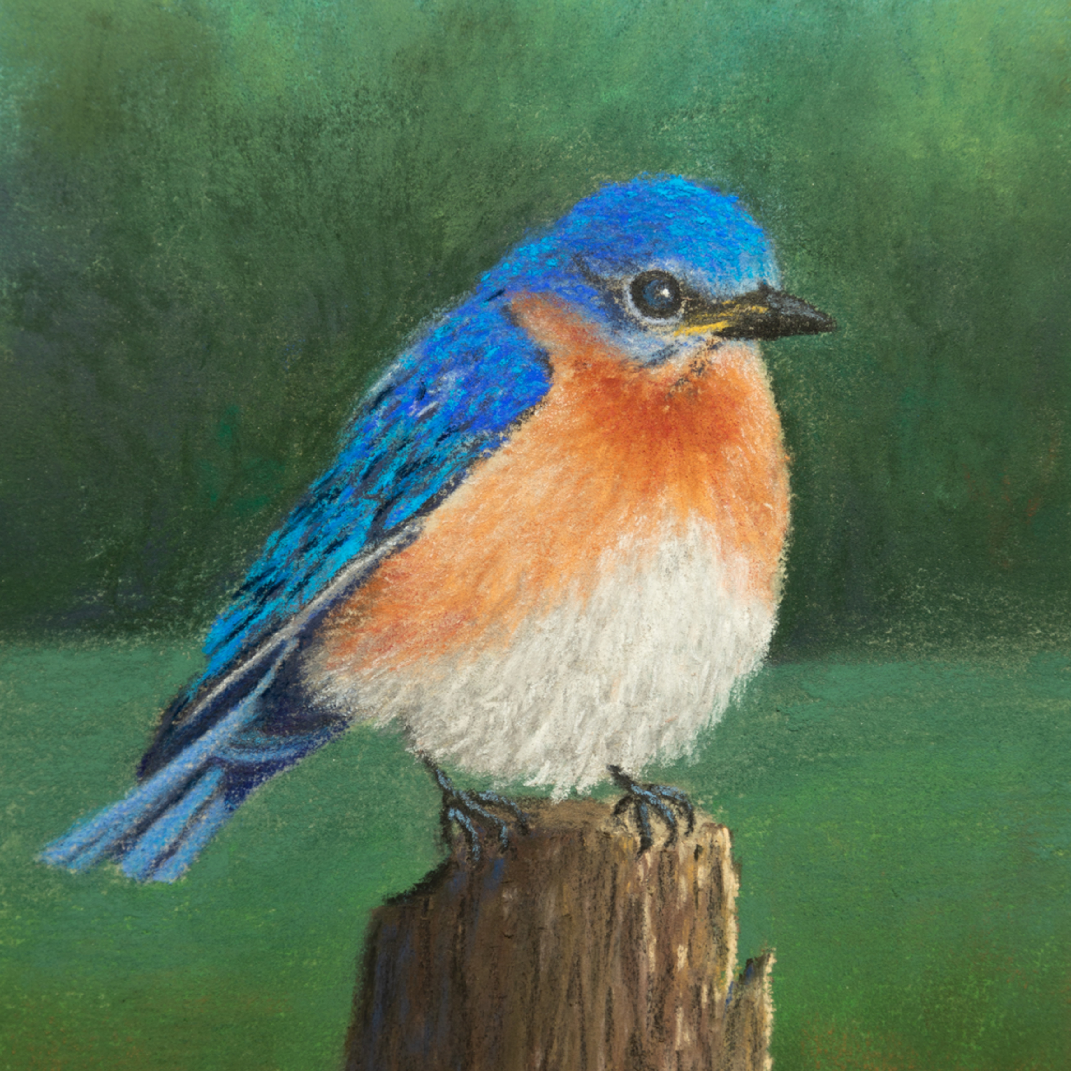 Bluebird resting jjnksf