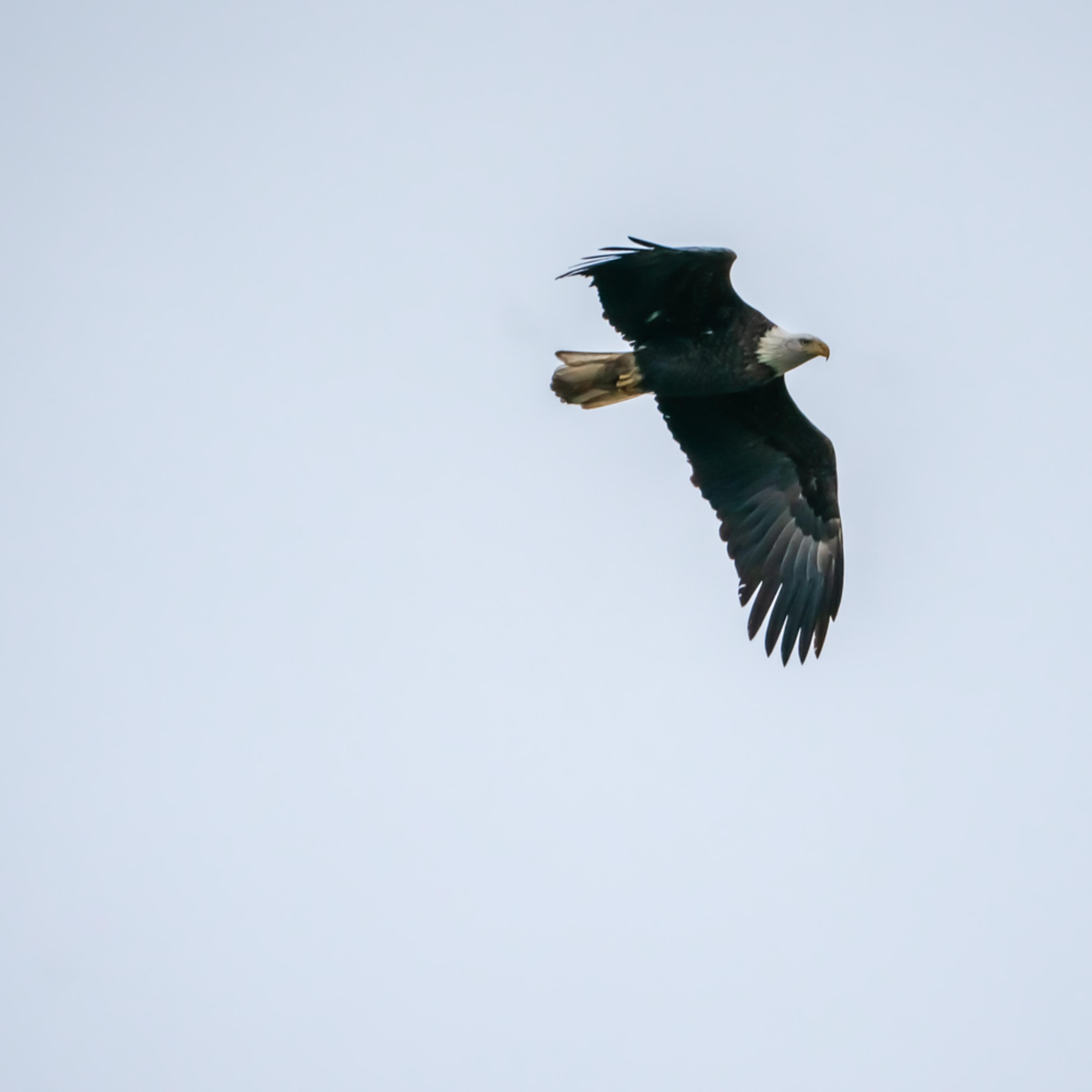Eagles 368 fbnujn
