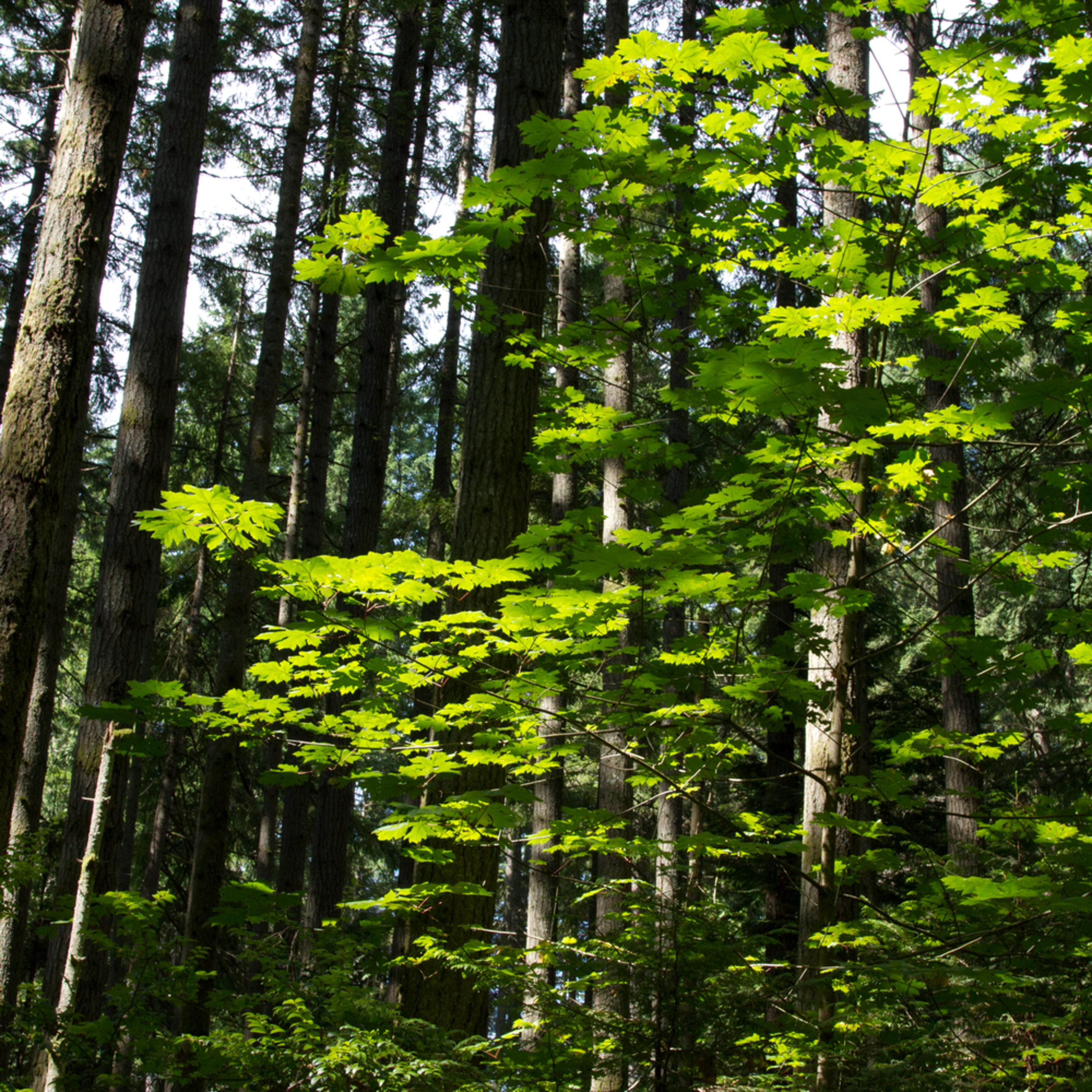 Bainbridge forest mygsfj