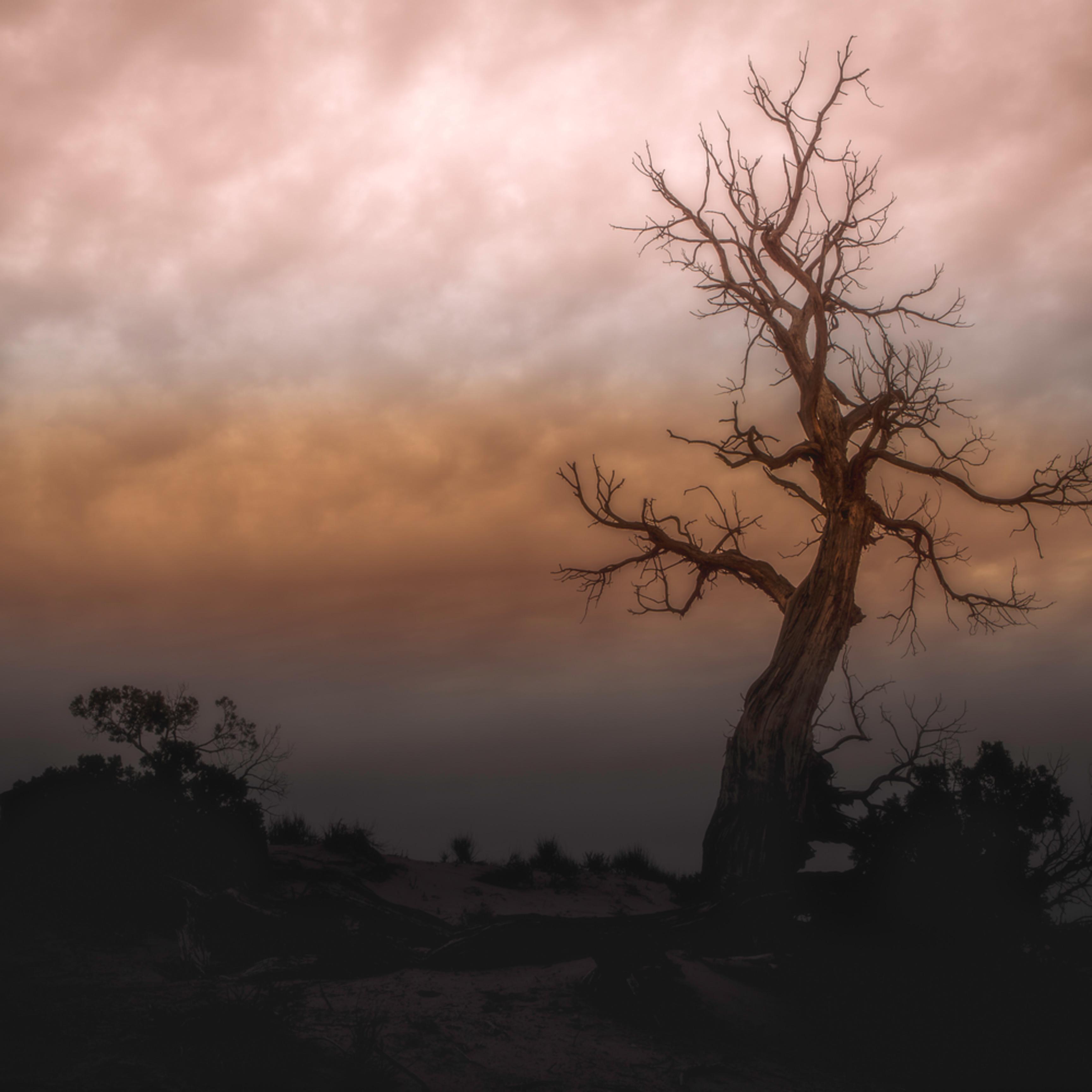 Monument tree aztvex