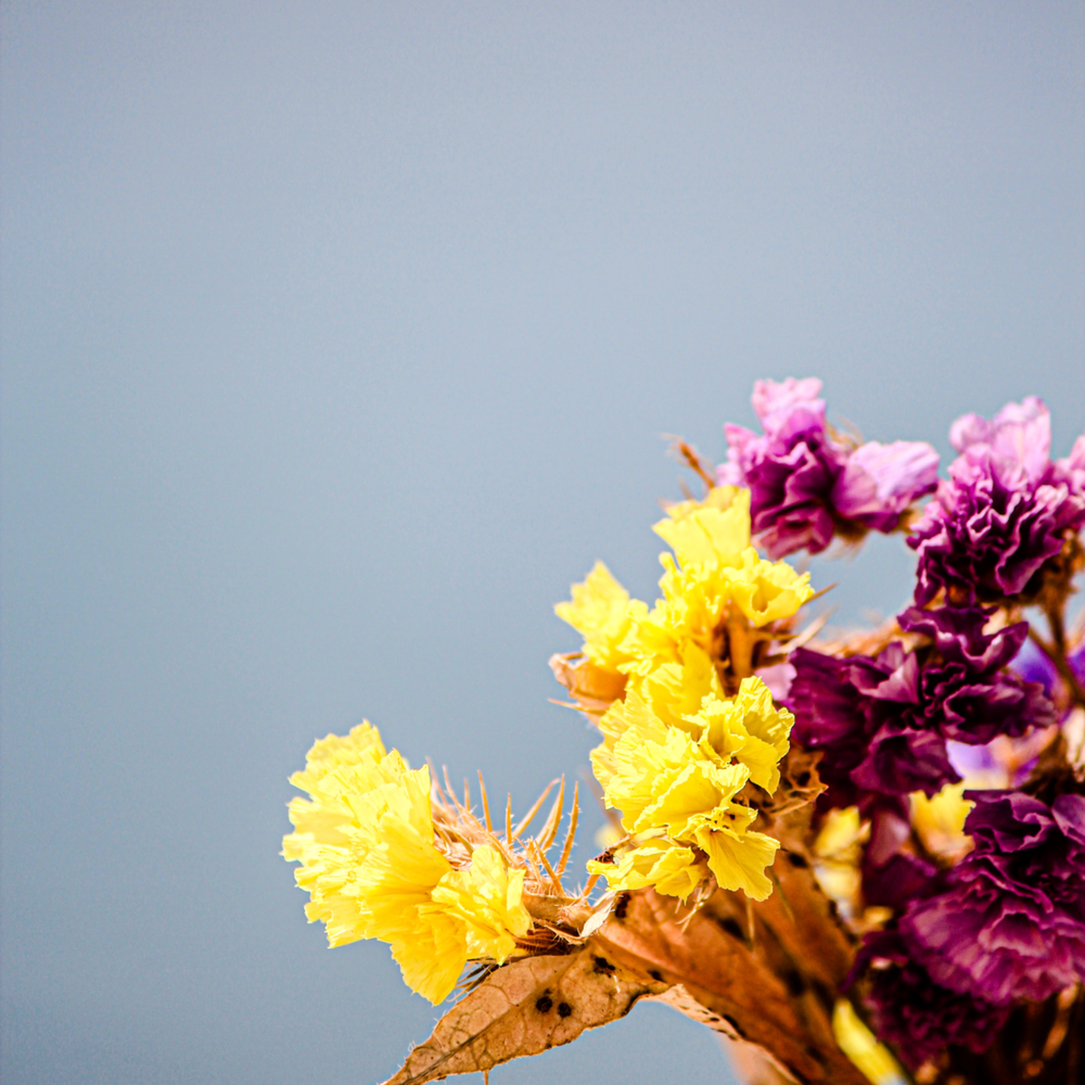 2319 flower fatwng