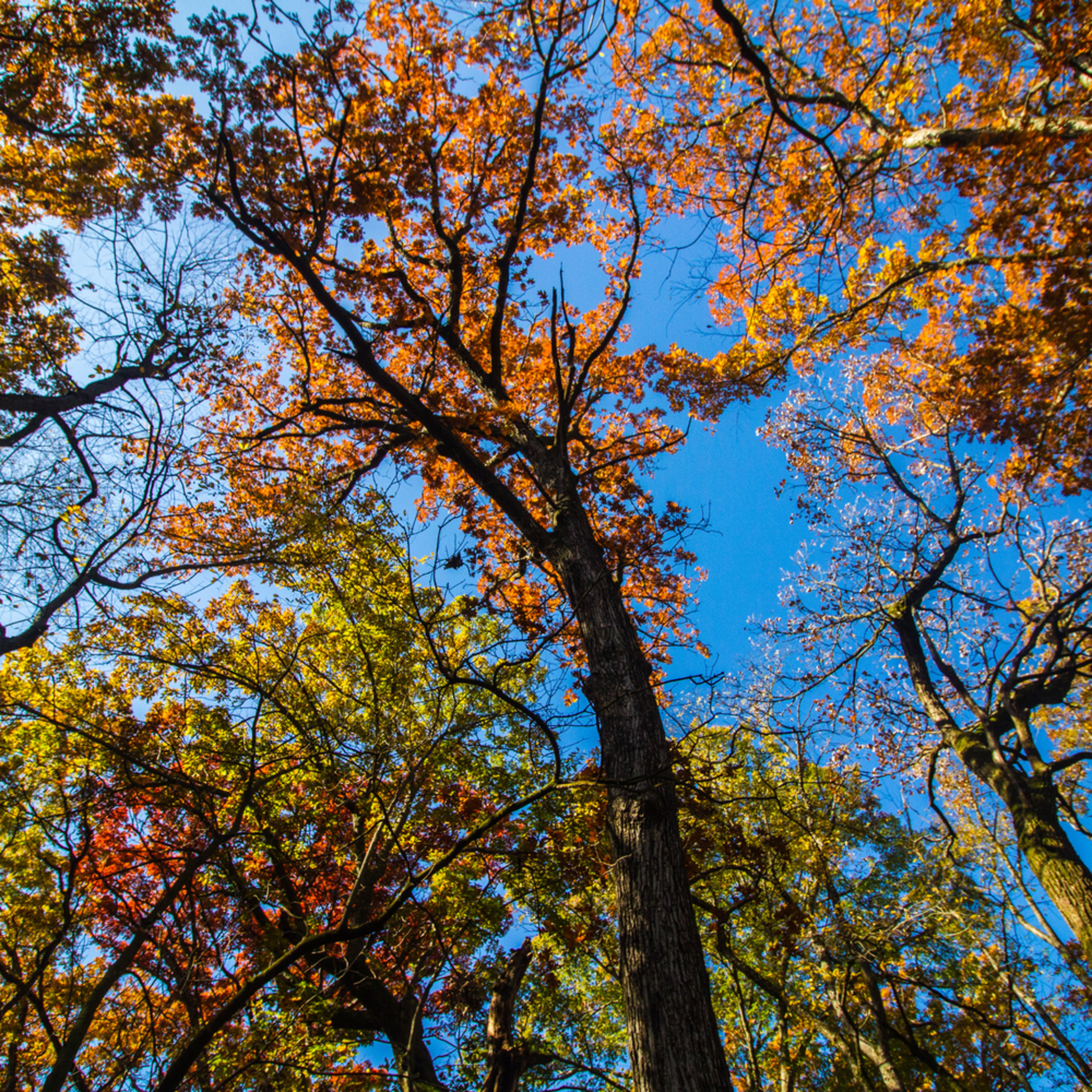 Fall colors overhead xxdu62