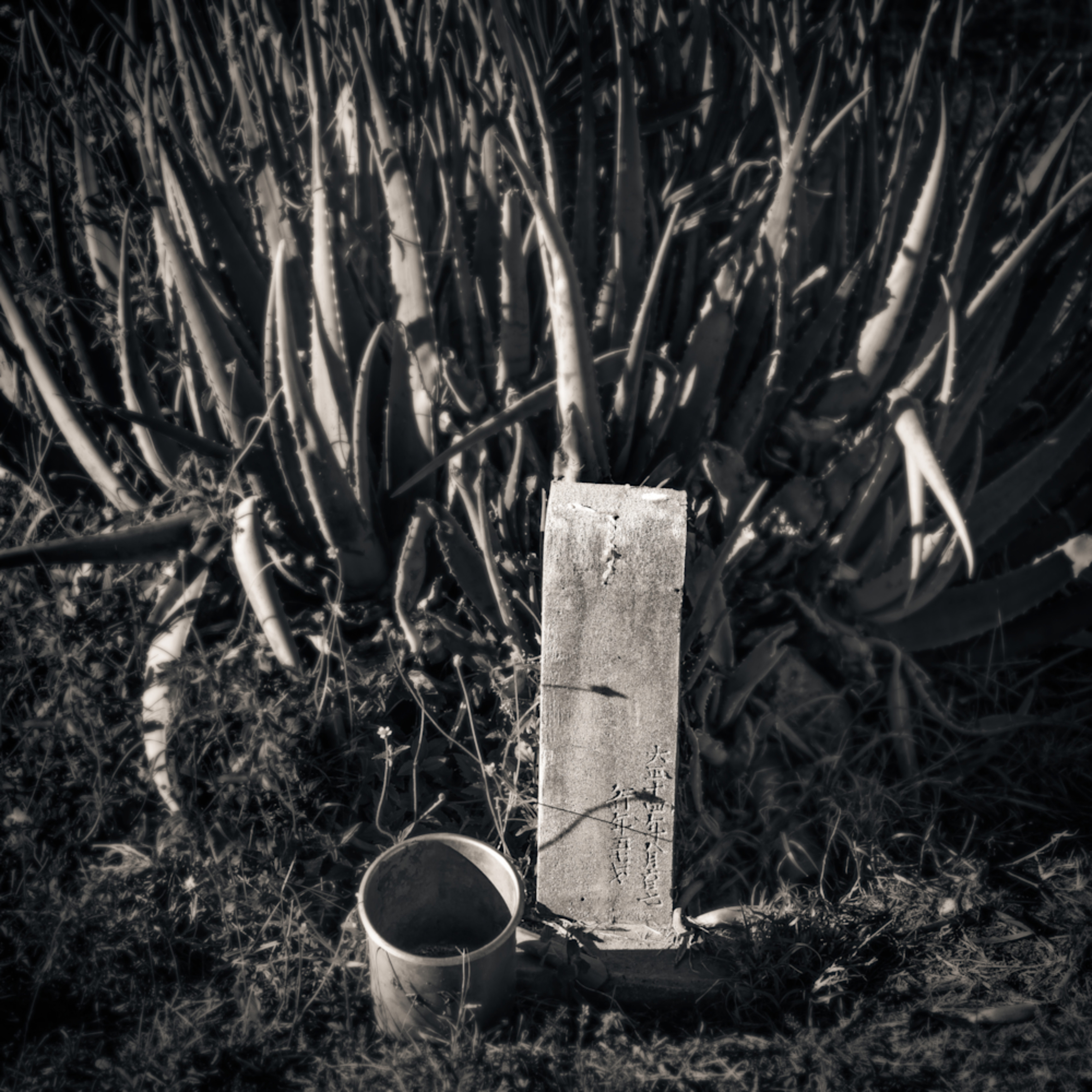 Grave marker and cactus maui 2018 mr1lxh