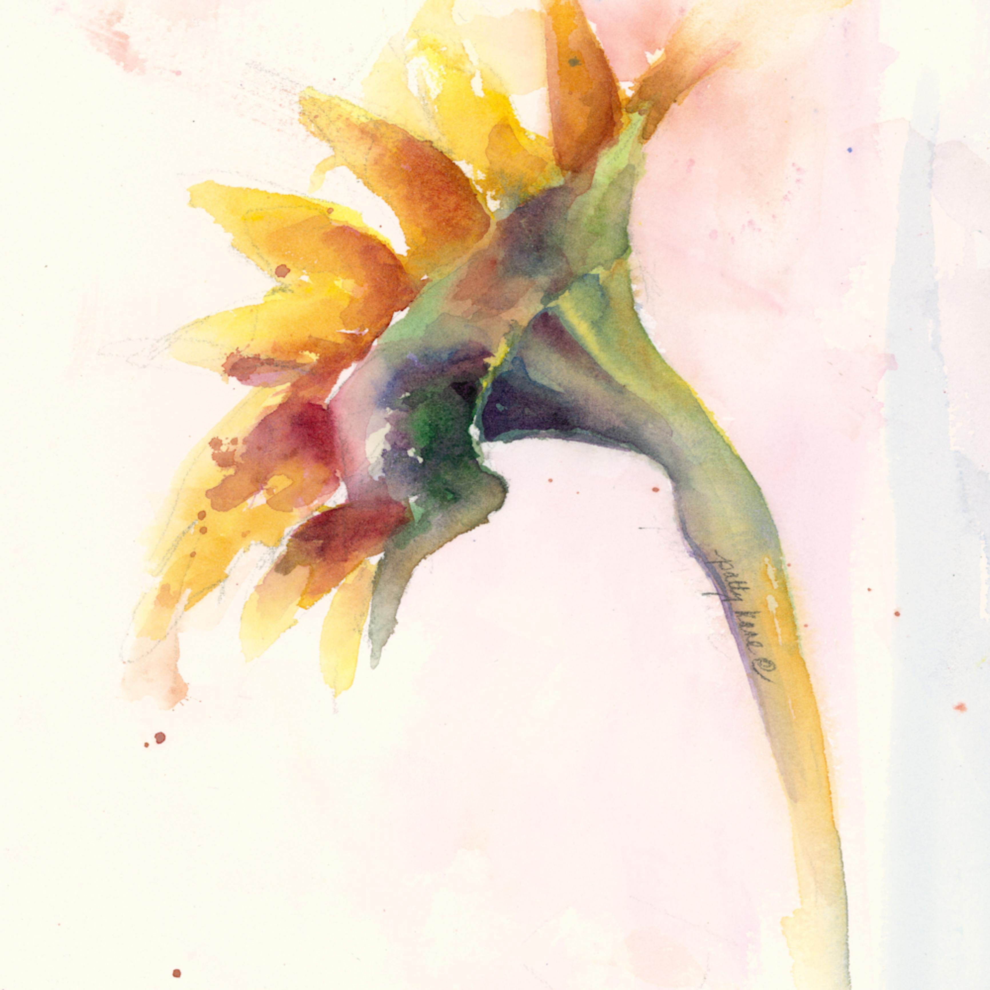 Sunflower mlnn8y
