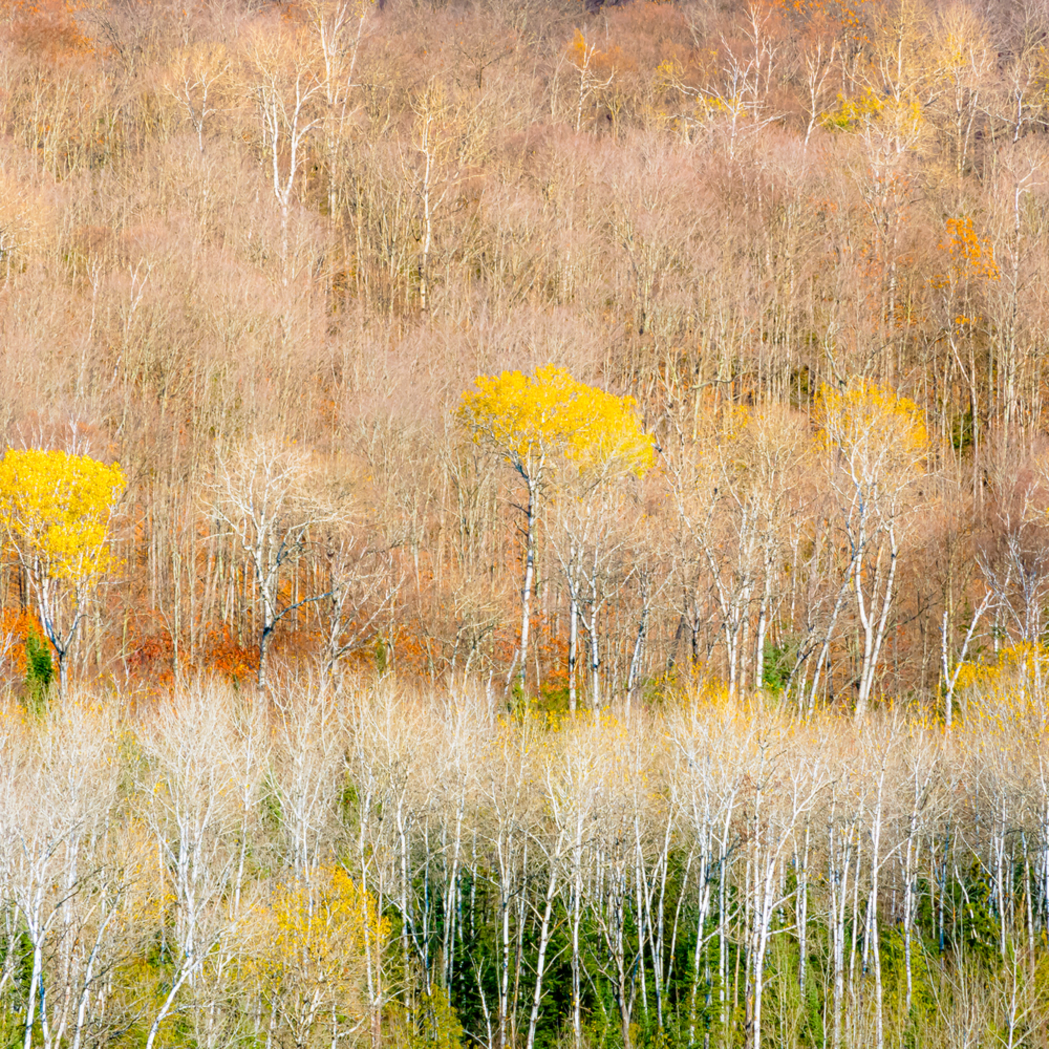 Ontario fall study2 fallnf