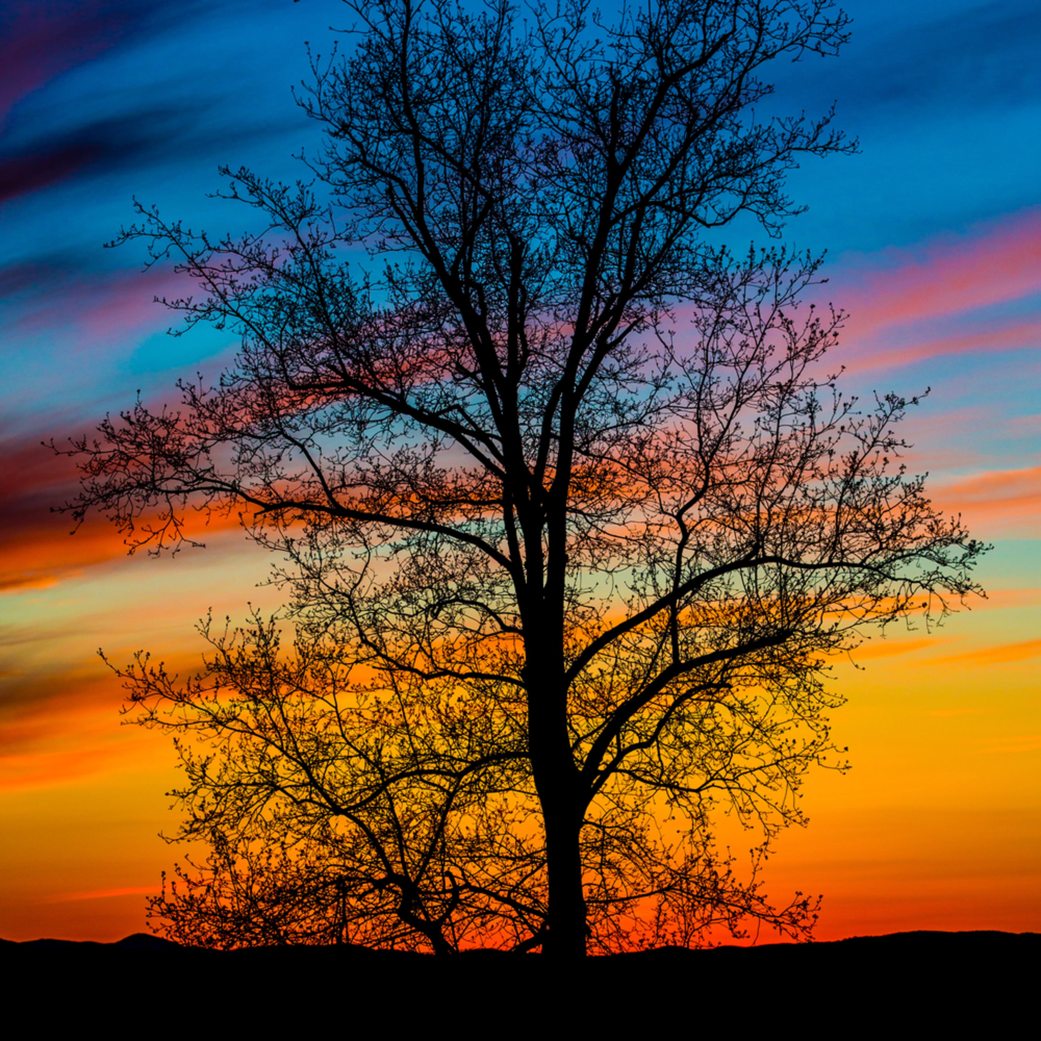 Sunset silhouette i ap8hym