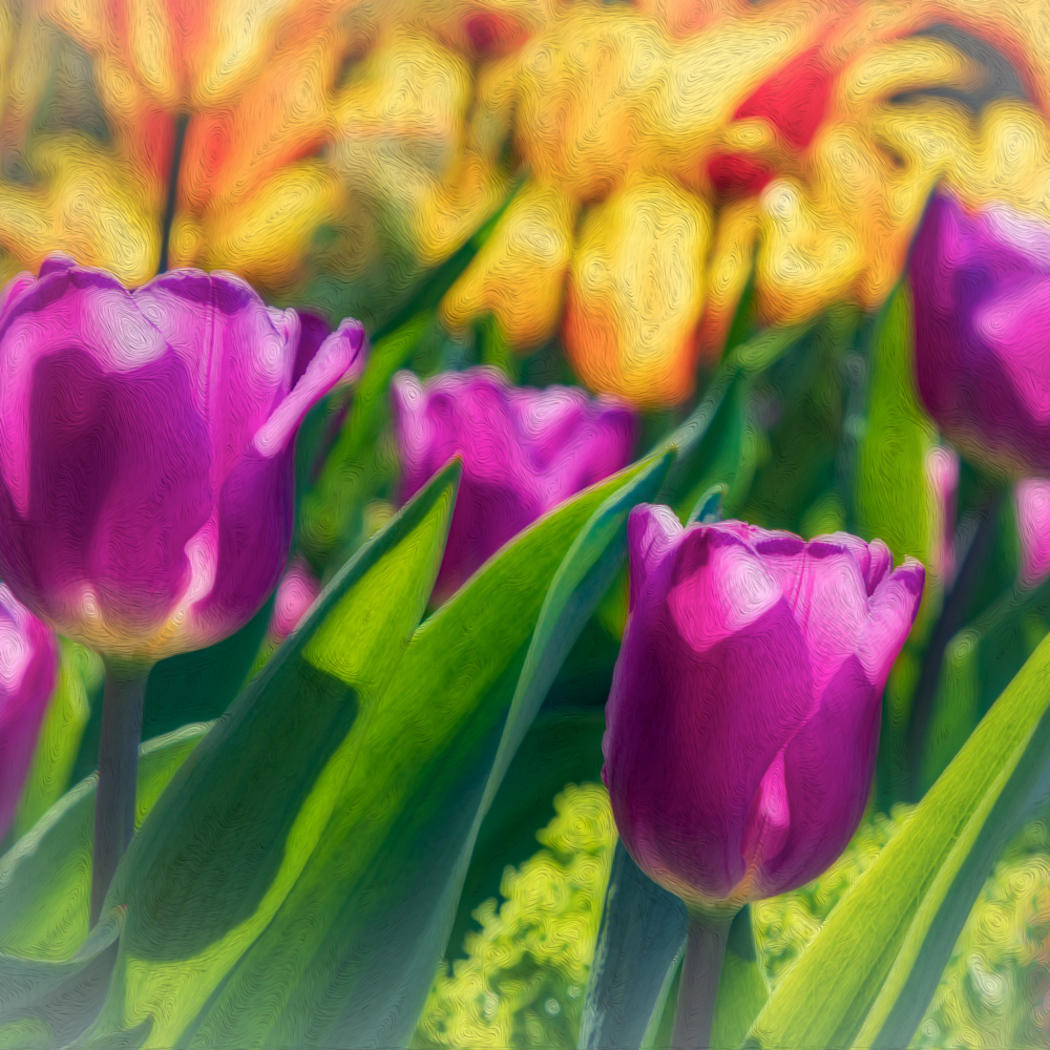 Pink tulips and yellow lilys vpnbsx