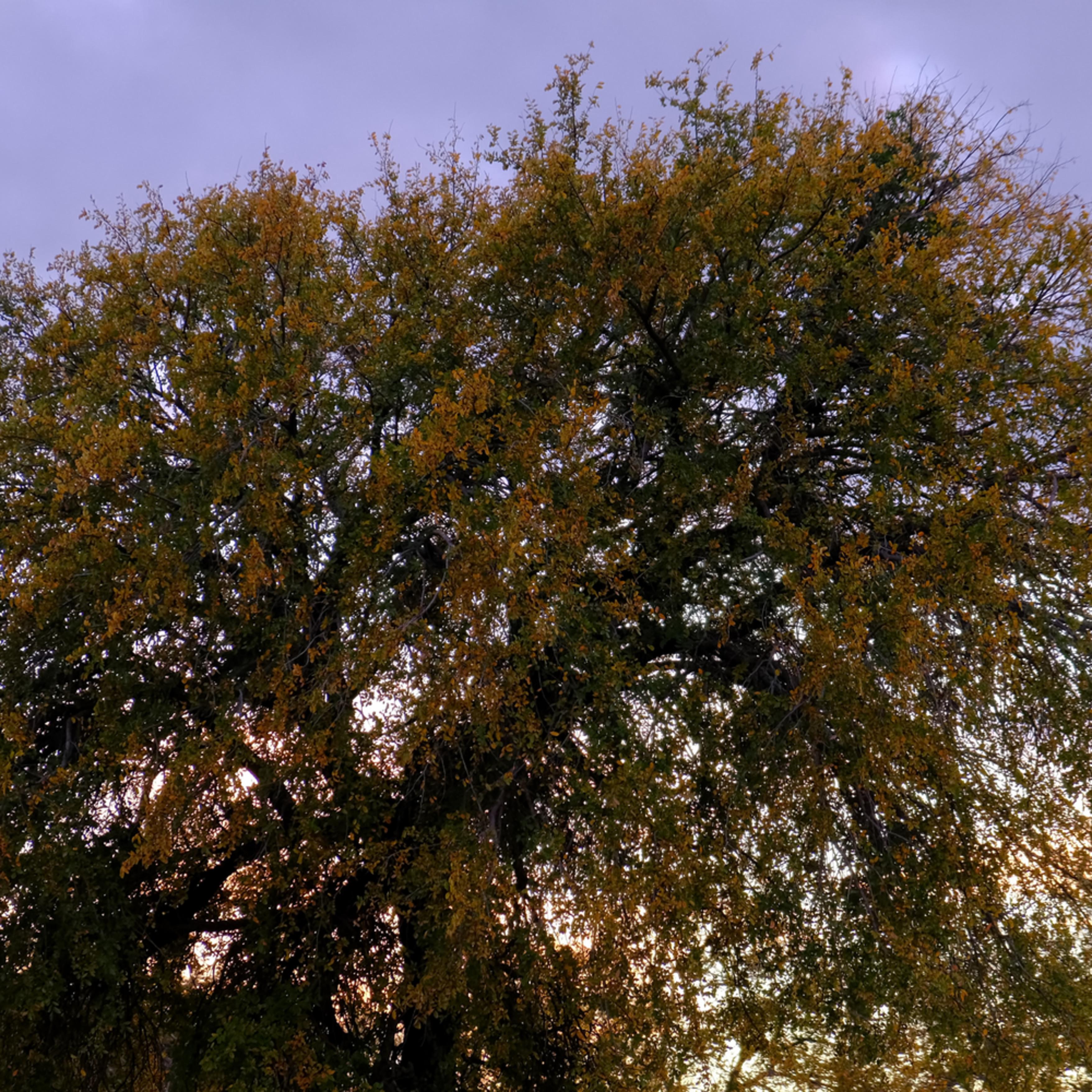 Sunset over texas 77 uaqzwb