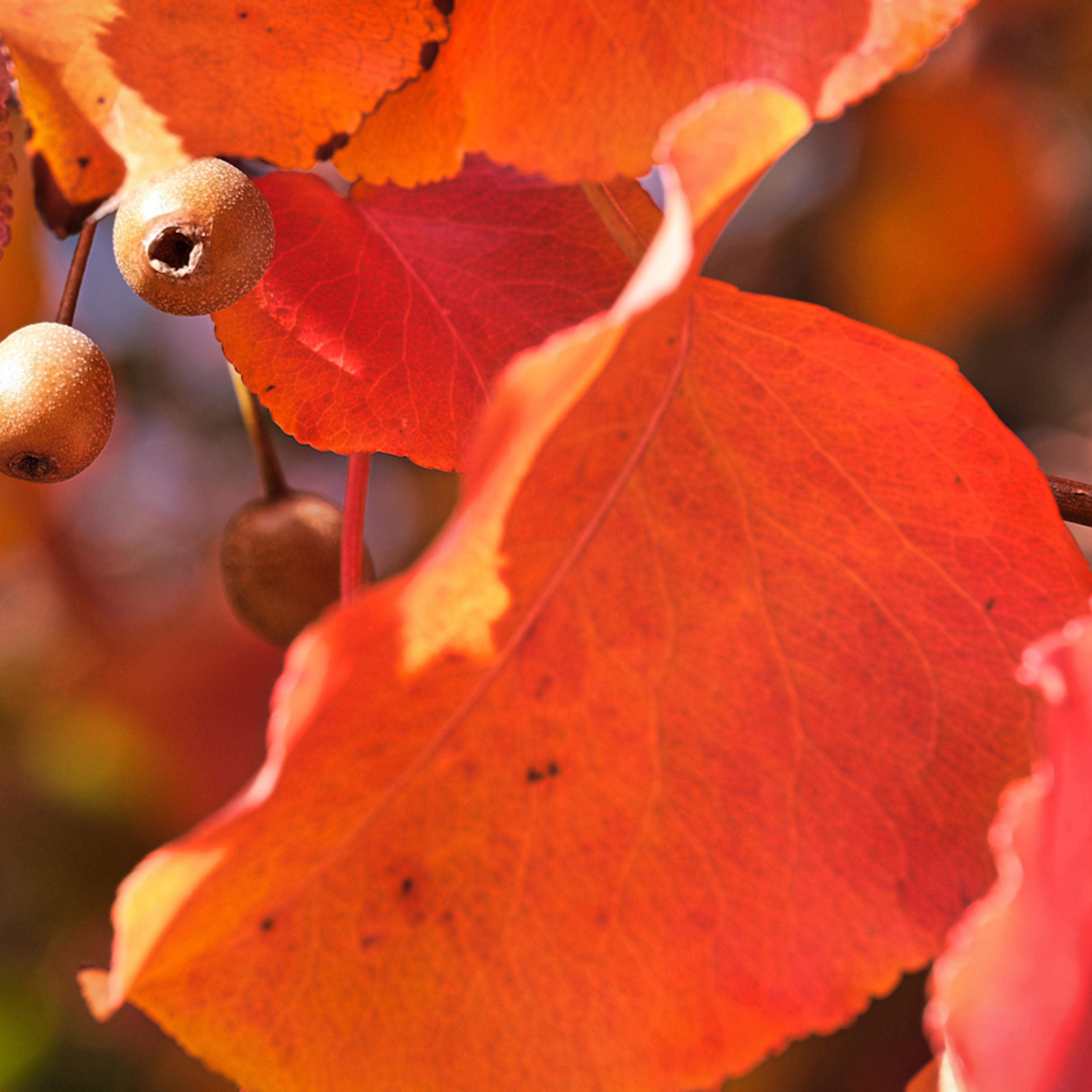 Fall colors 13 clesch