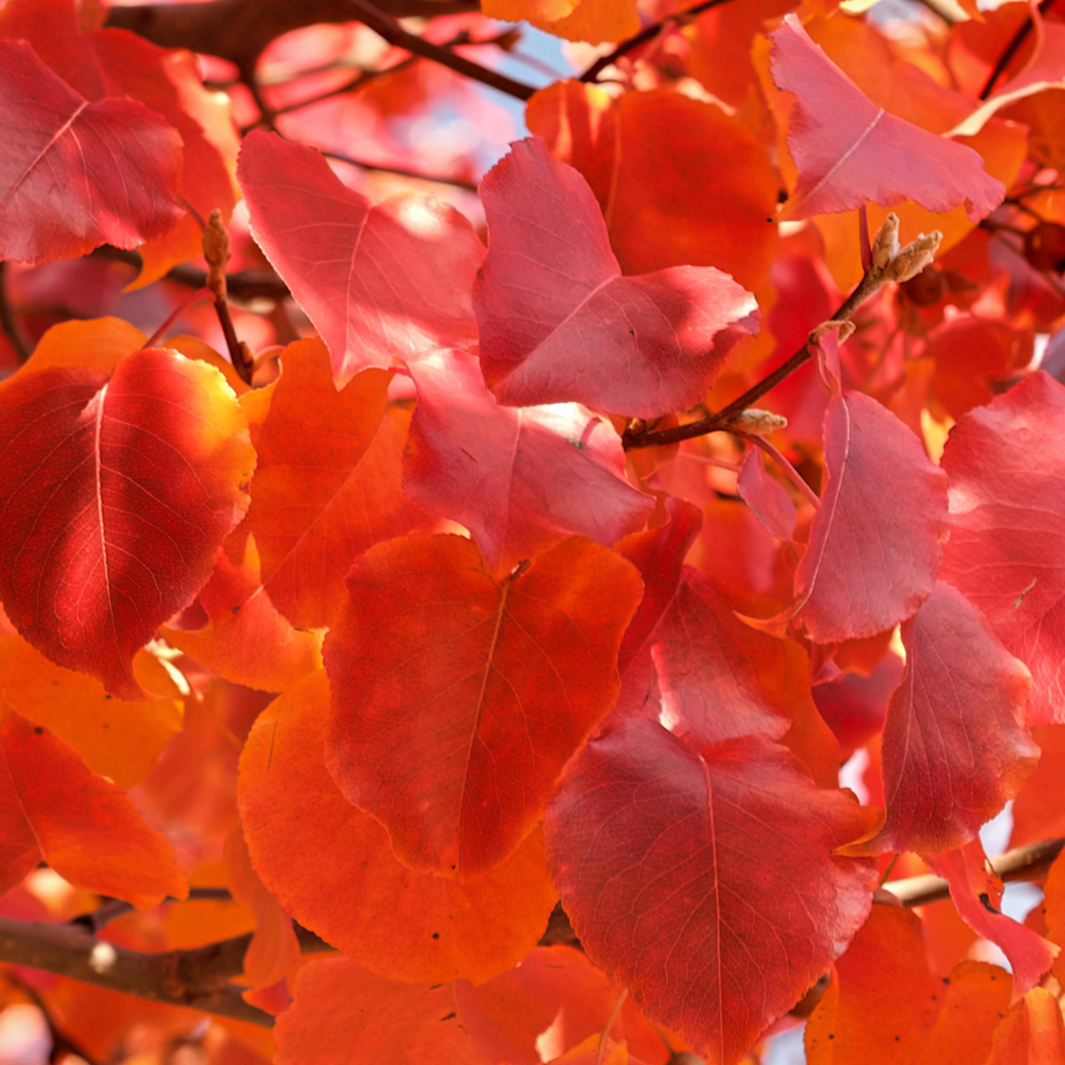 Fall colors 19 meyk2f
