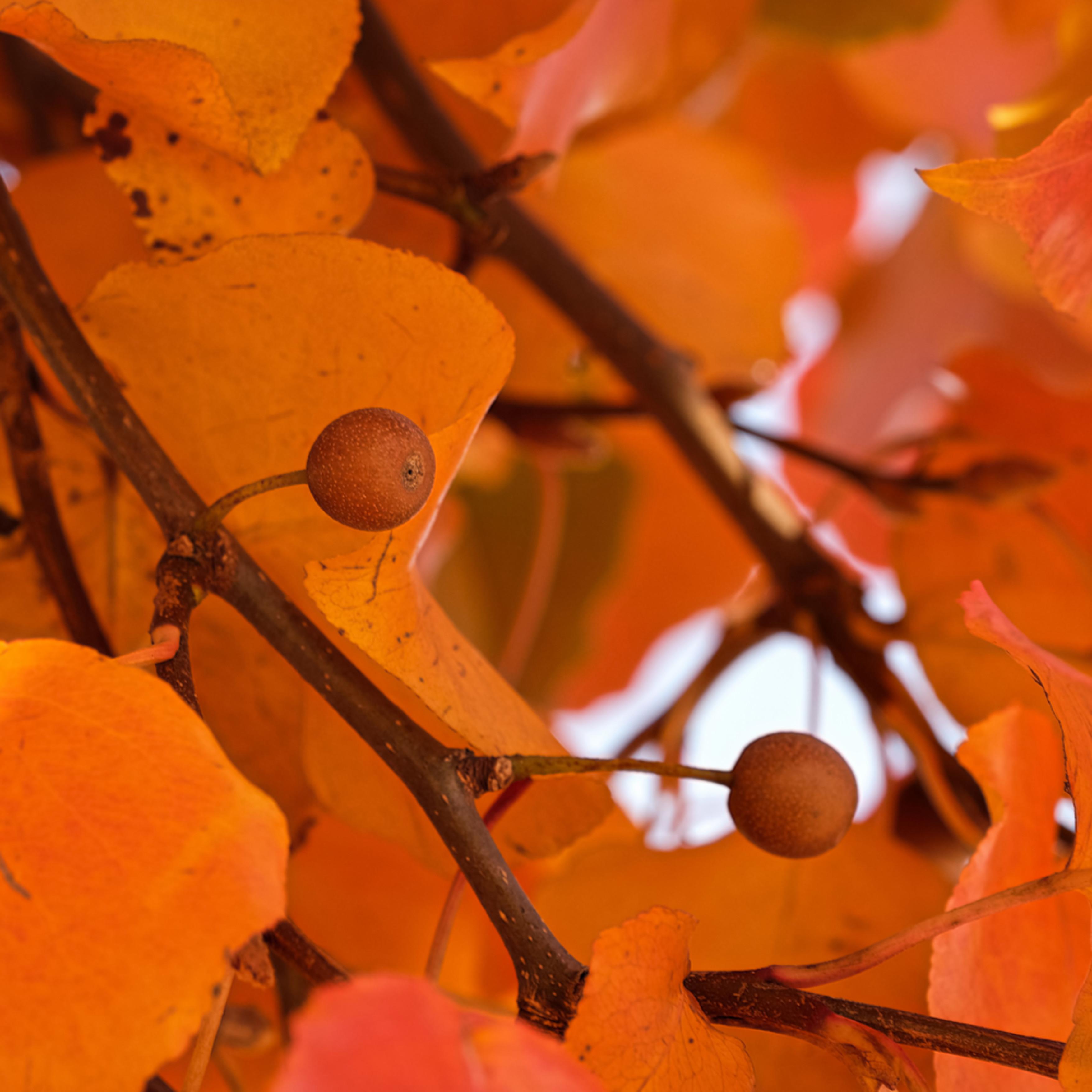 Fall colors 21 uci2c4