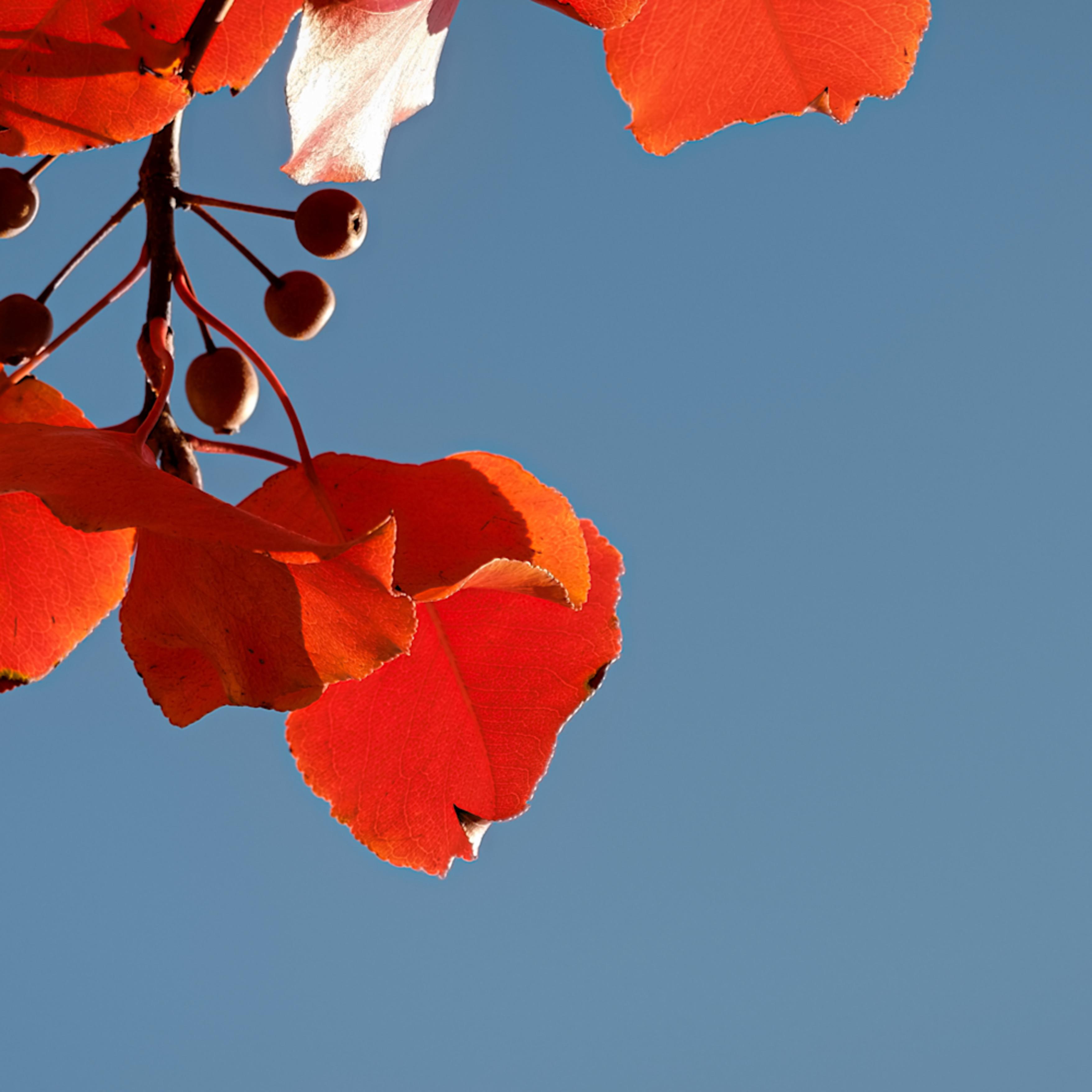 Fall colors 45 rwdl2z