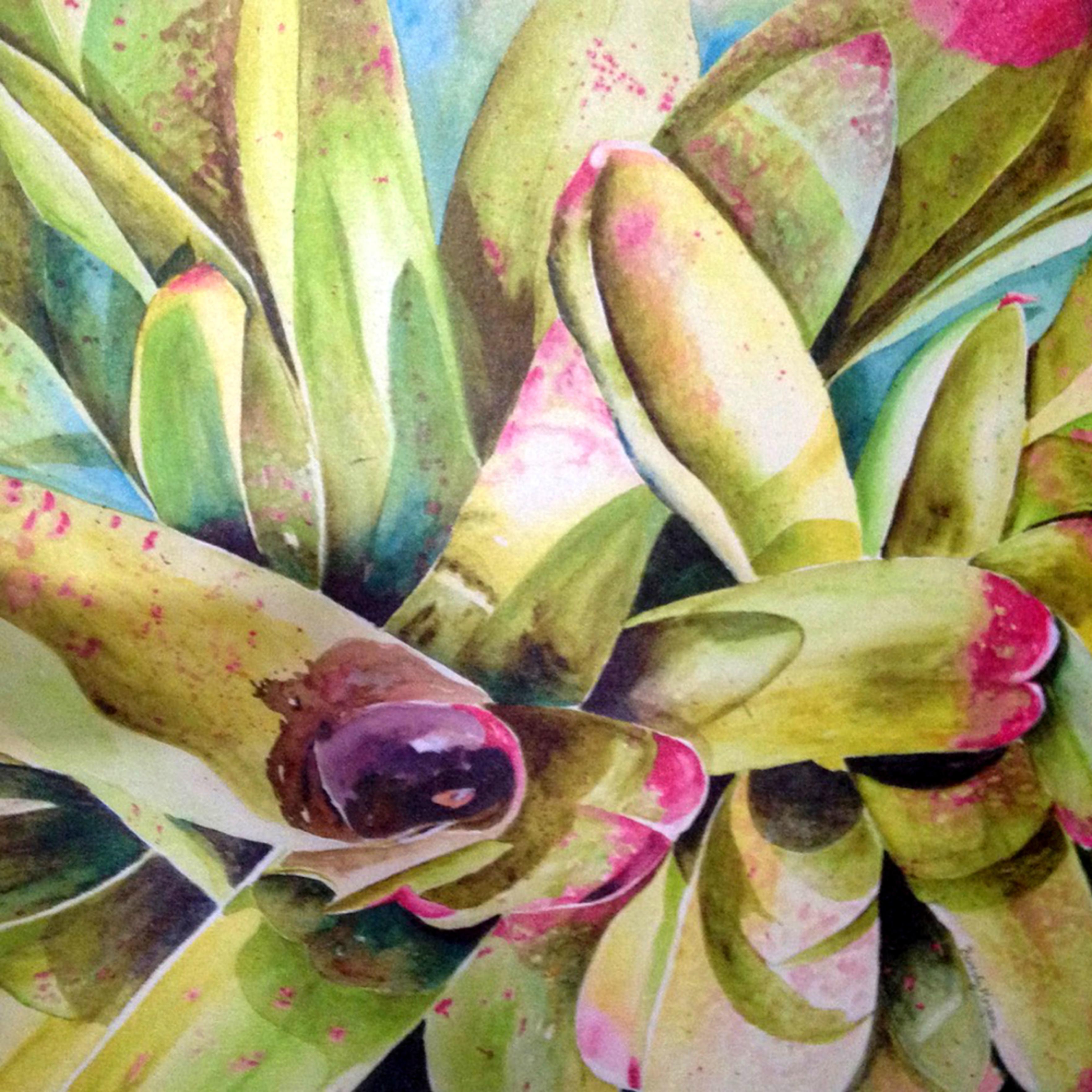 Bromeliads ftjv0z