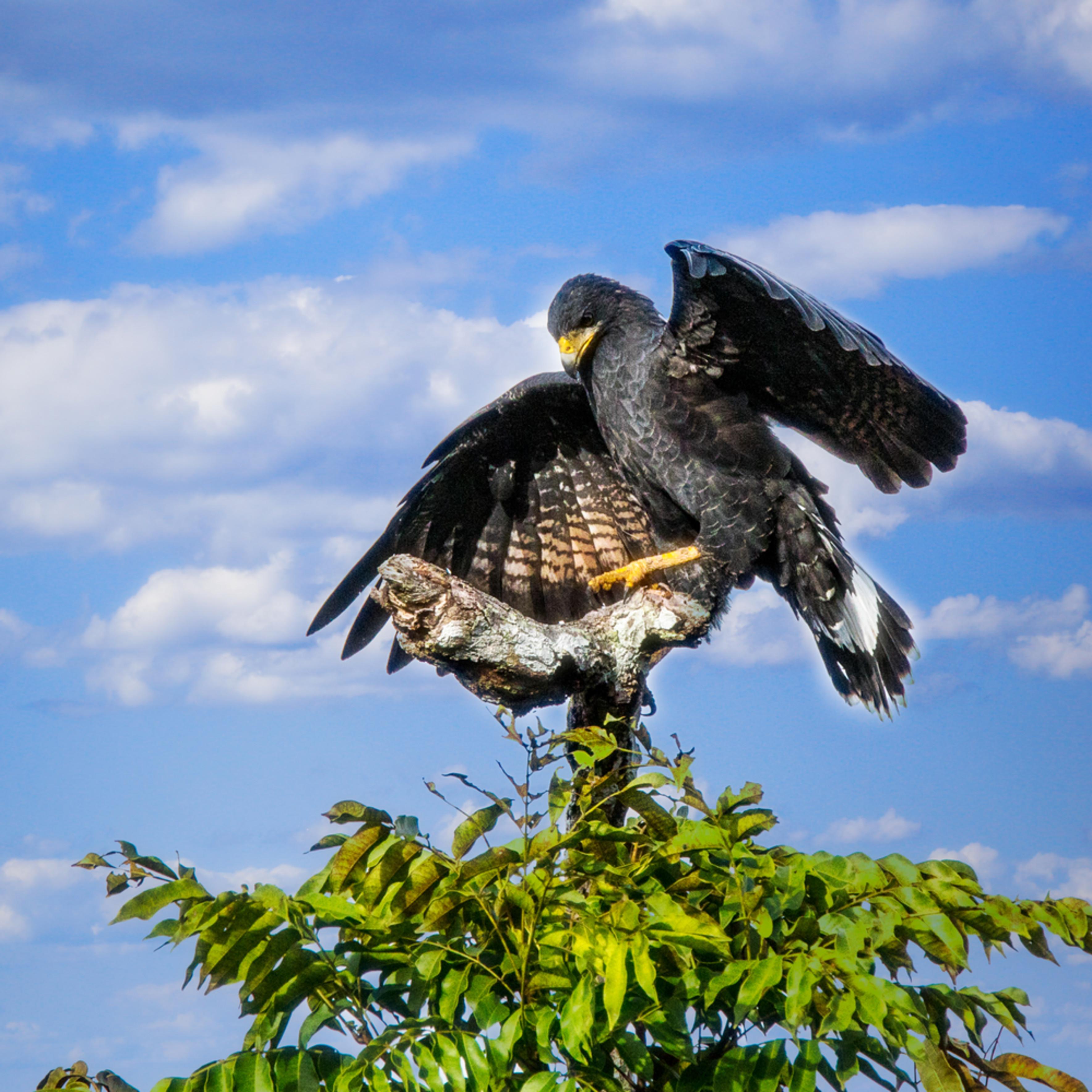 Birds  47 kah8uw