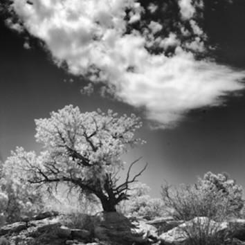 Infrared infared canyonlands tree5662 koral martin opn4xx