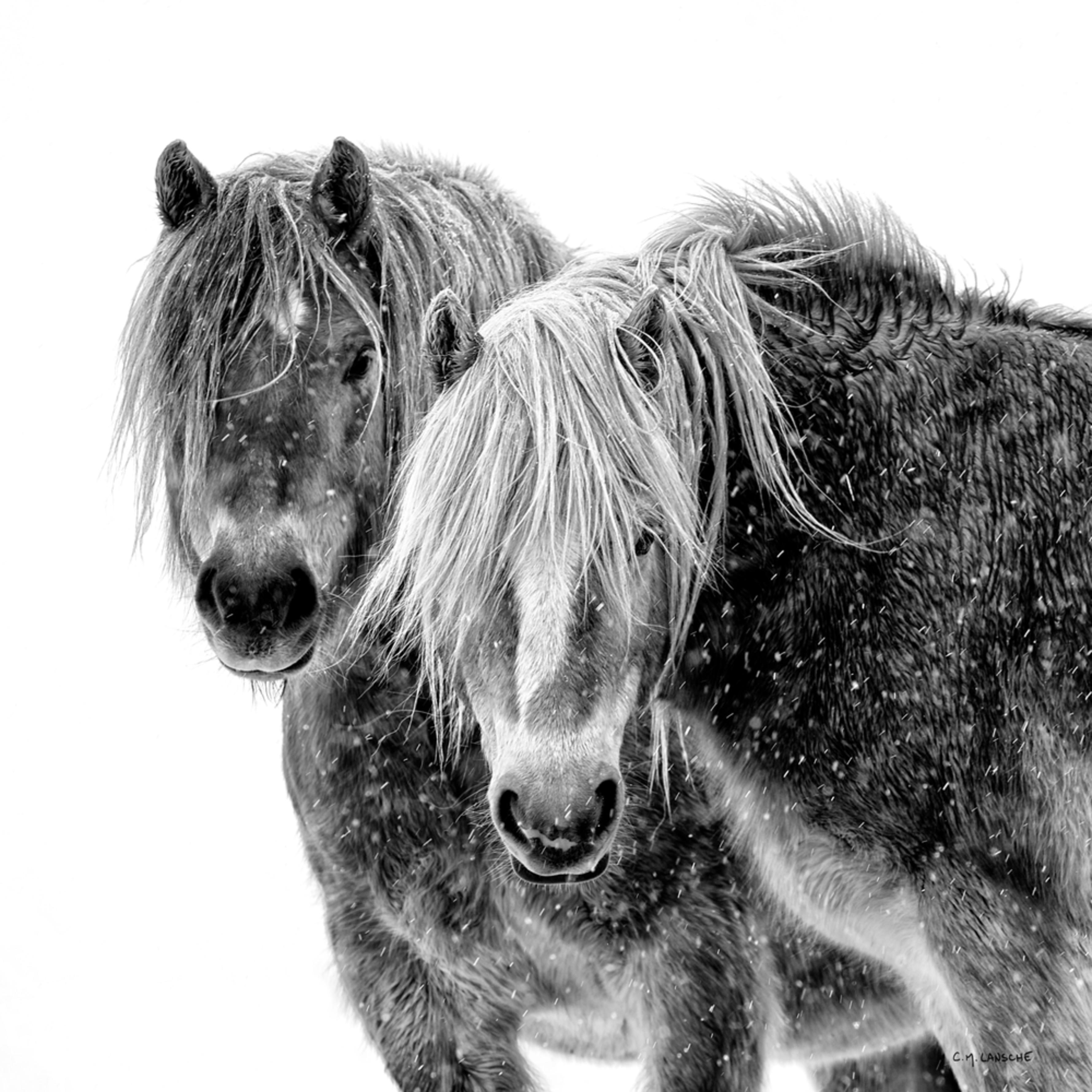 1534 winter portrait square 3558 x 3558 j100argb s1blko79p4h5v2rt 20180826 1459 xcit2o
