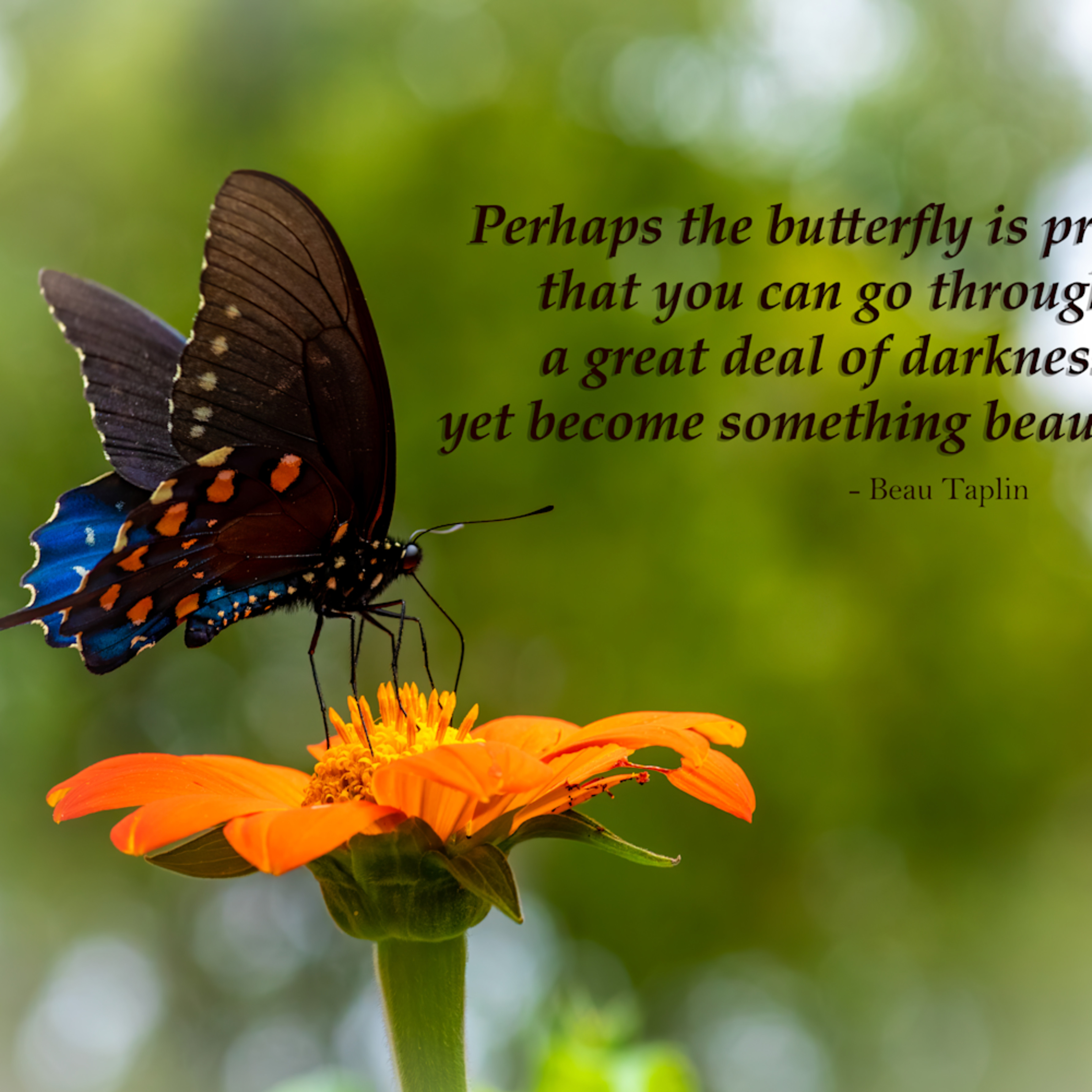 Perhaps the butterfly is proof  dudbw3