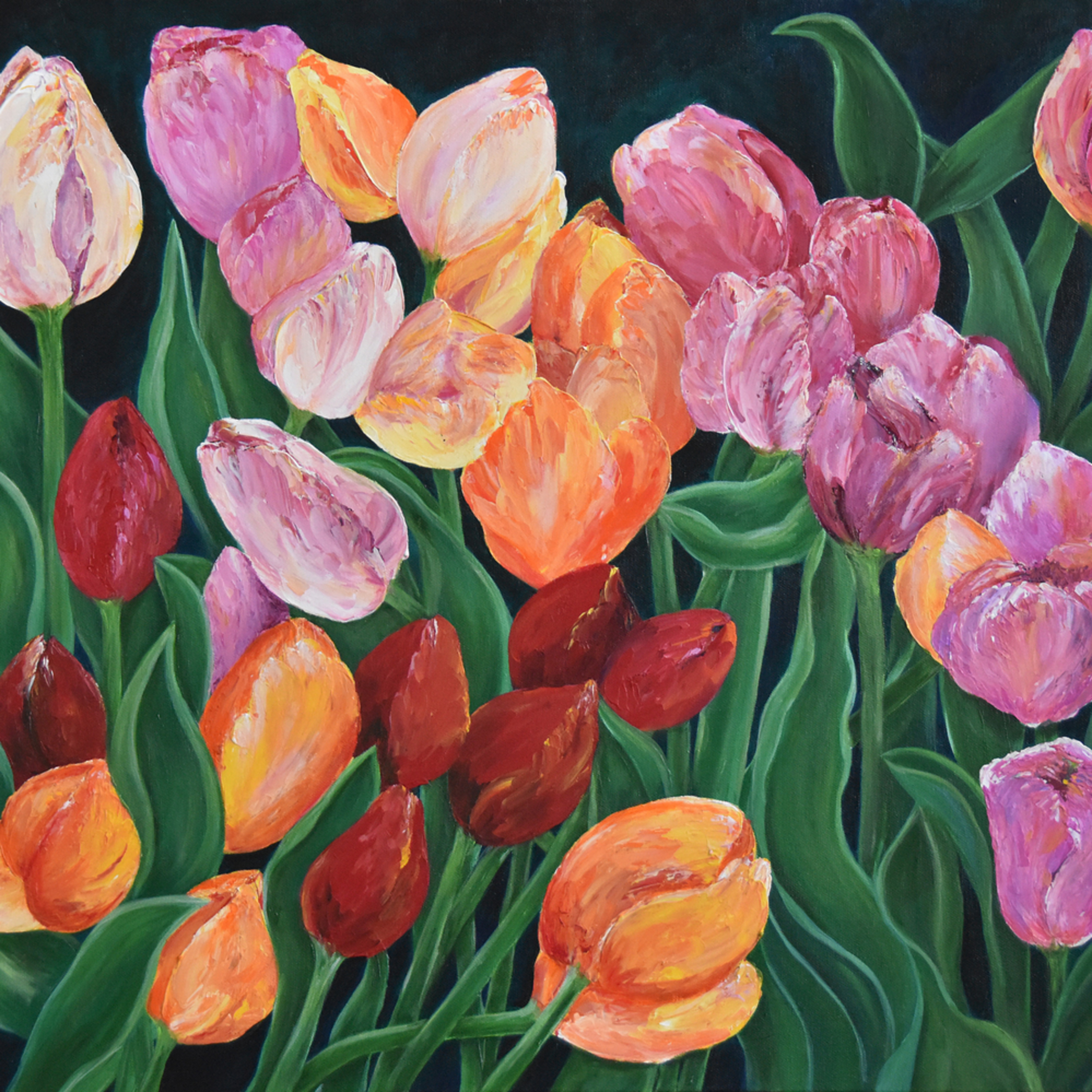 Tulips in switzerland bz62jl